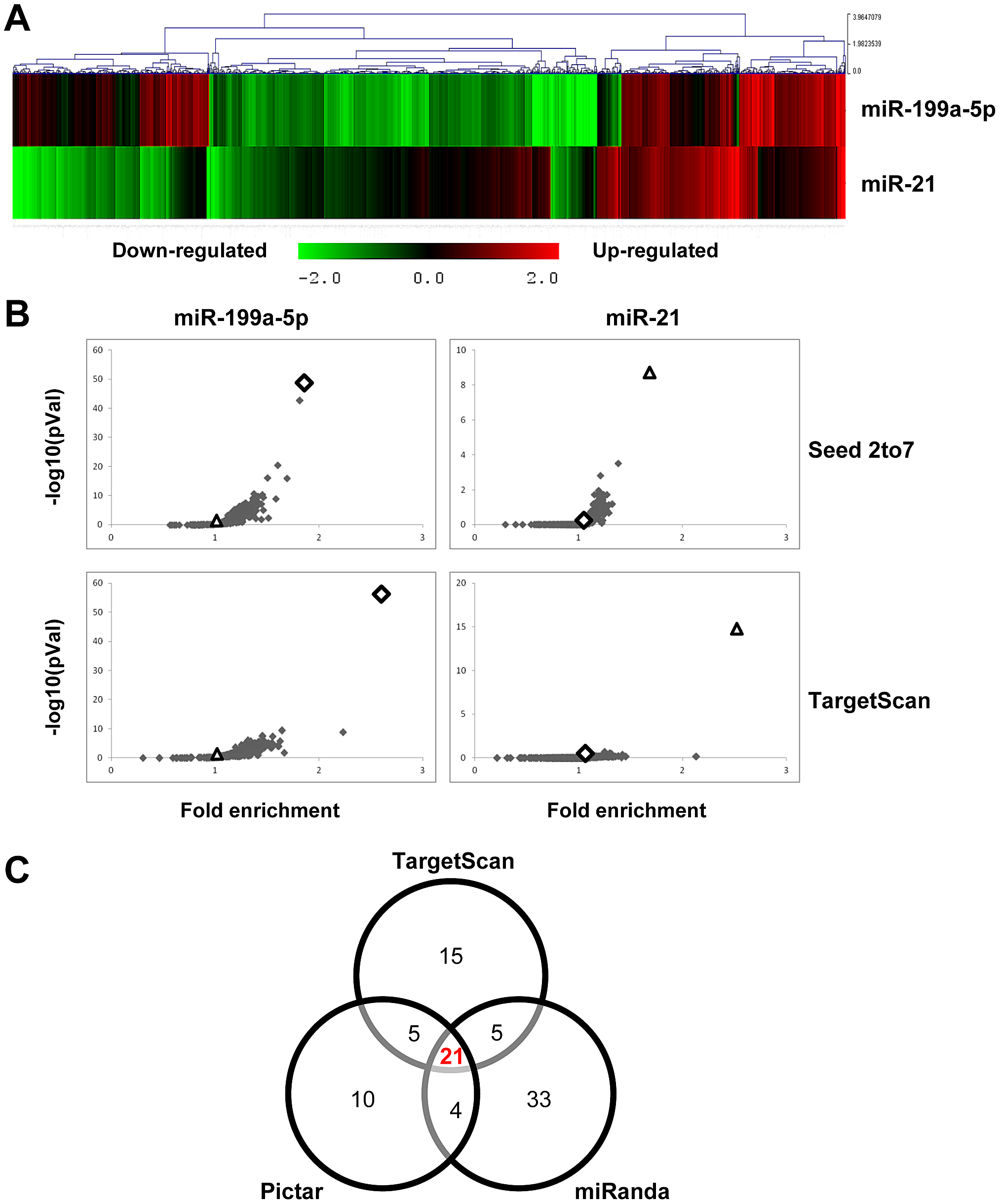 Identification of miR-199a-5p candidate targets using a transcriptomic approach.