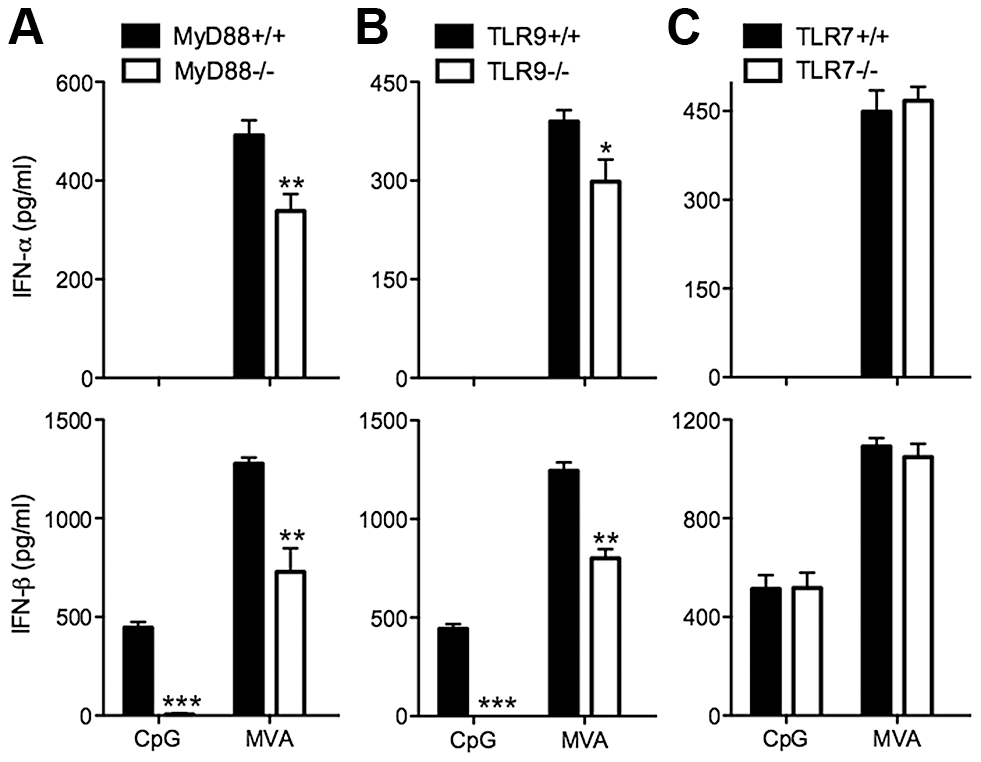 TLR9 and MyD88 contribute to the induction of type I IFN in cDCs by MVA.