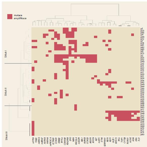 Diagram shlukové analýzy výsledků molekulárního profilování somatických genových mutací a amplifikací. Graph 2. Dendrogram of a cluster analysis of the results of molecular profiling of selected somatic mutations and gene amplifications.
