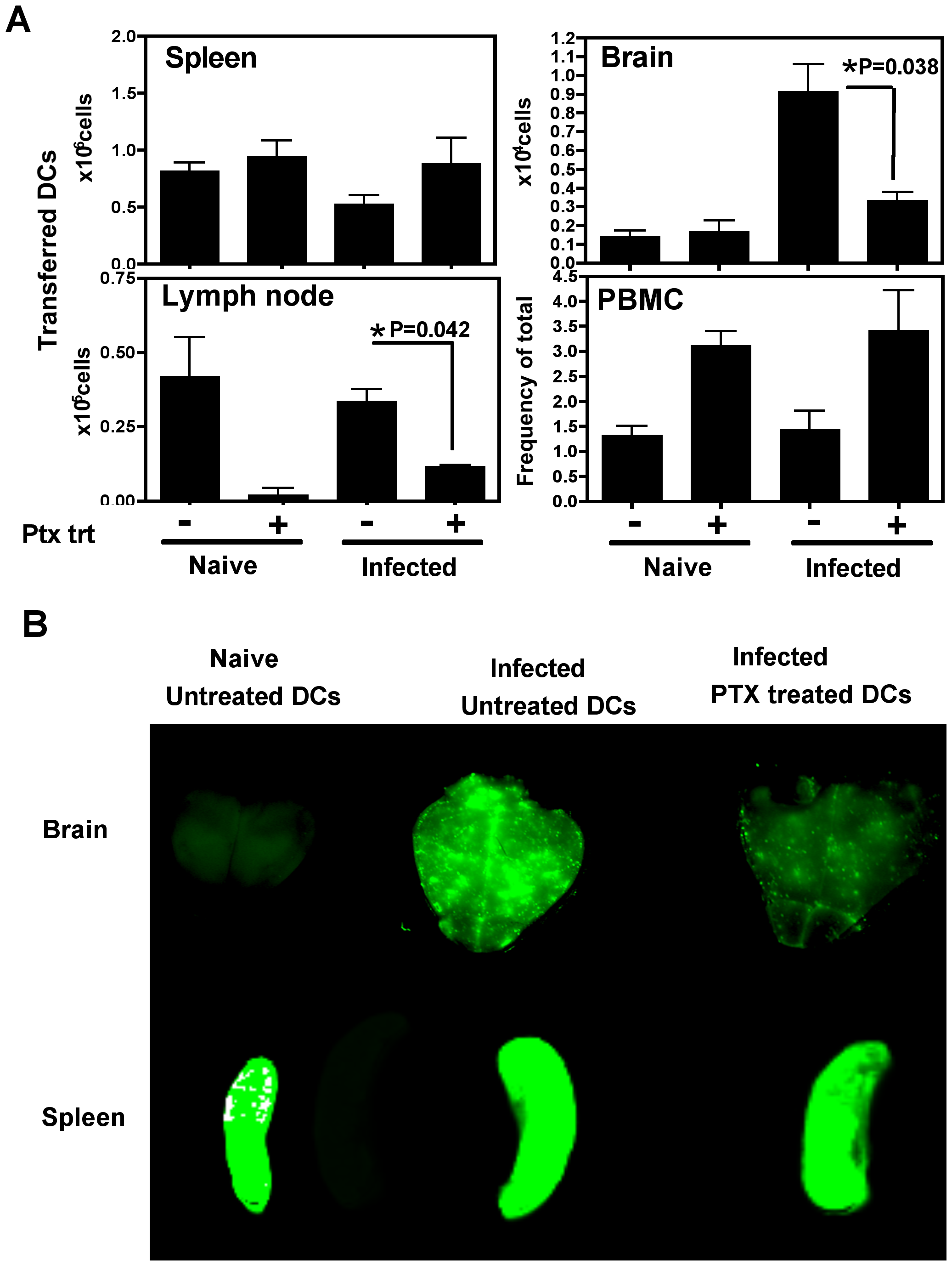 Migration of adoptively transferred DCs into the brain is a pertussis toxin sensitive process.