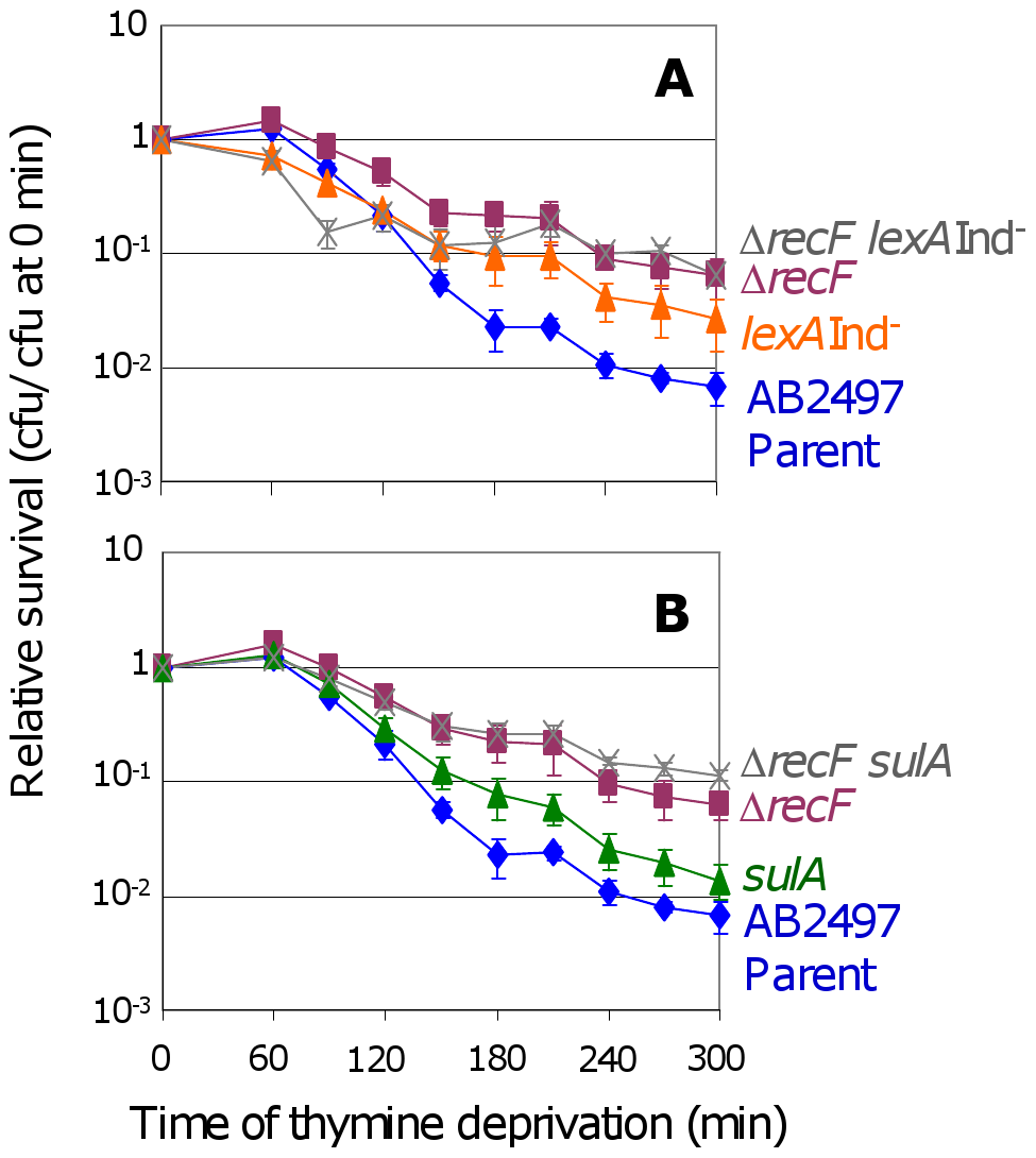 RecF promotes TLD <i>via</i> SOS–dependent and SOS–independent pathways.