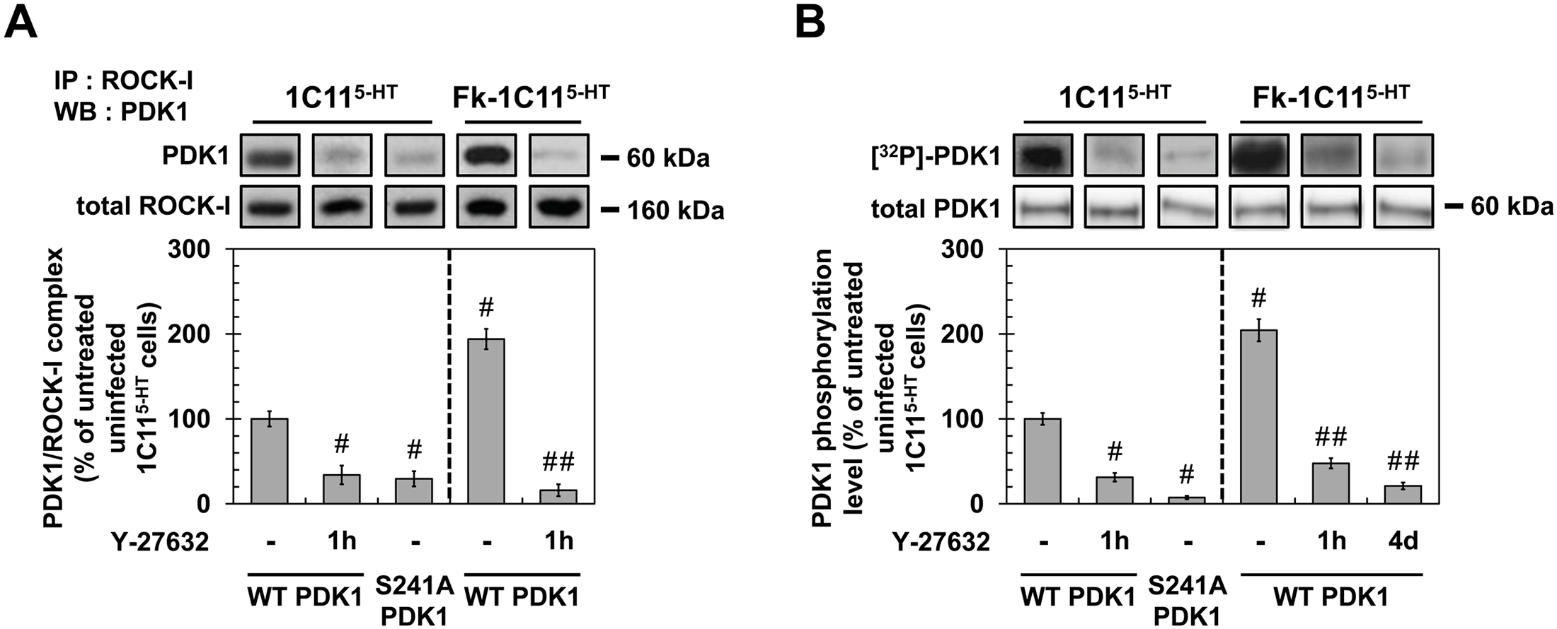 ROCK-I interacts with PDK1 and phosphorylates PDK1.