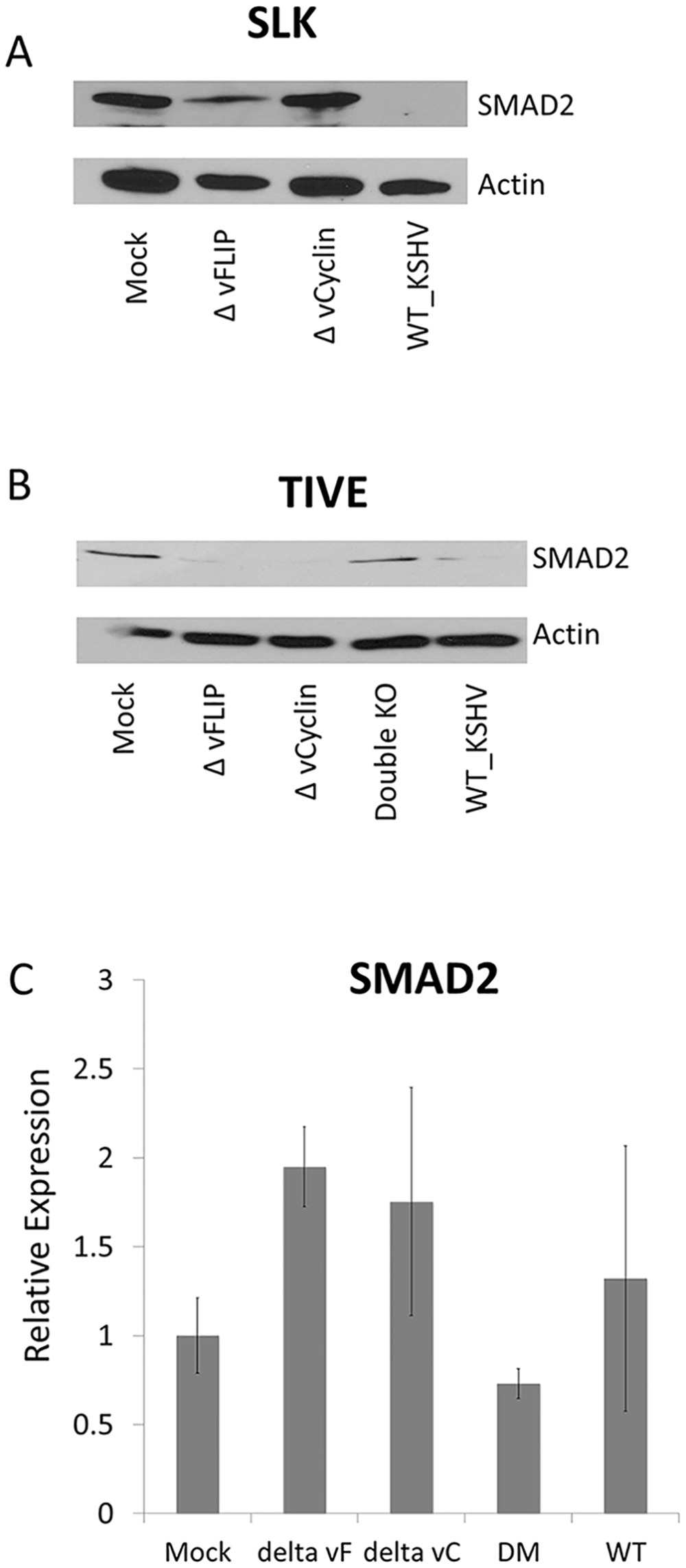 vFLIP or vCyclin deletion mutant virus recovered the SMAD2 expression in SLK or TIVE cells.