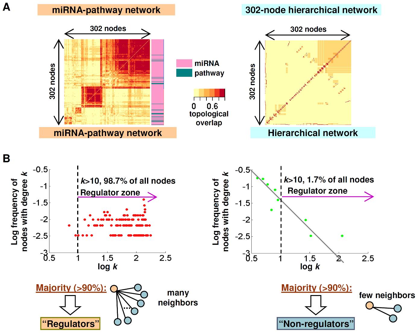 miRNA–pathway network topology.