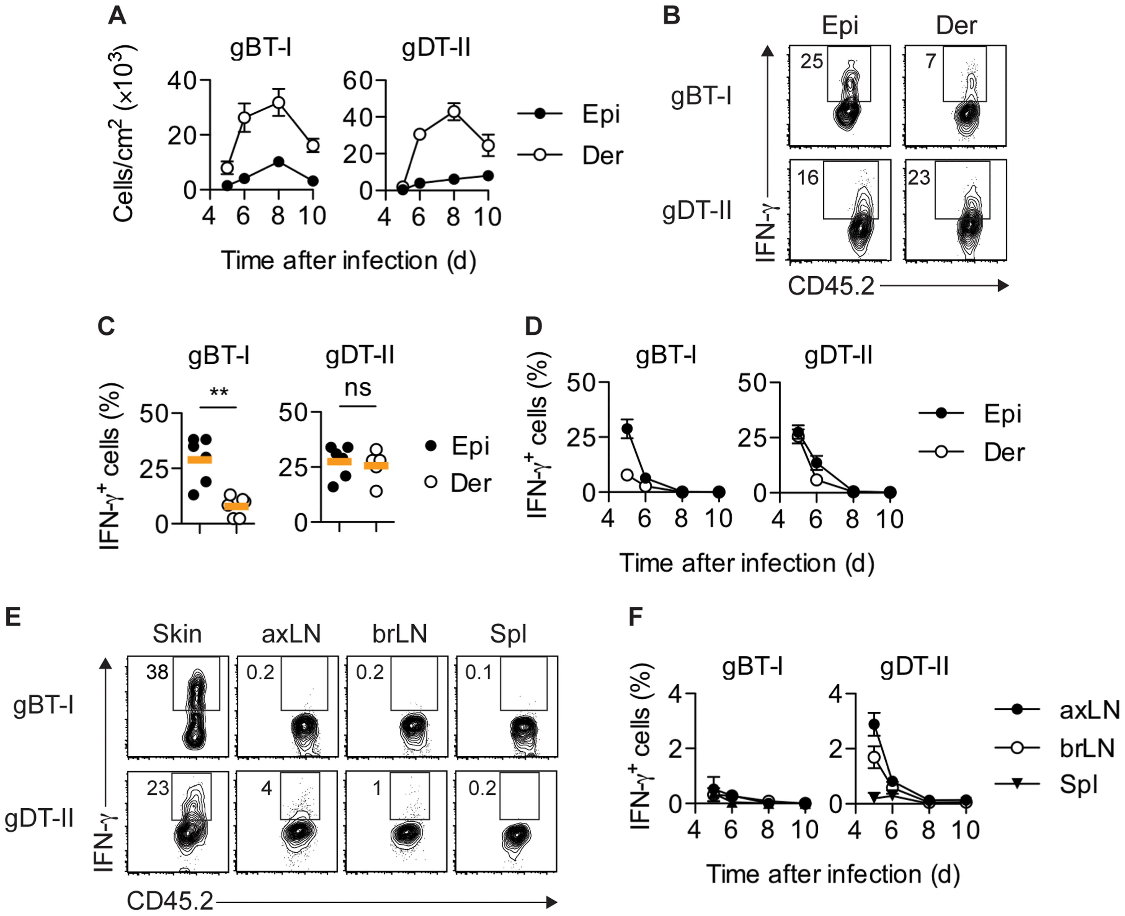 Distribution of IFN-γ<sup>+</sup> T<sub>EFF</sub> cells.