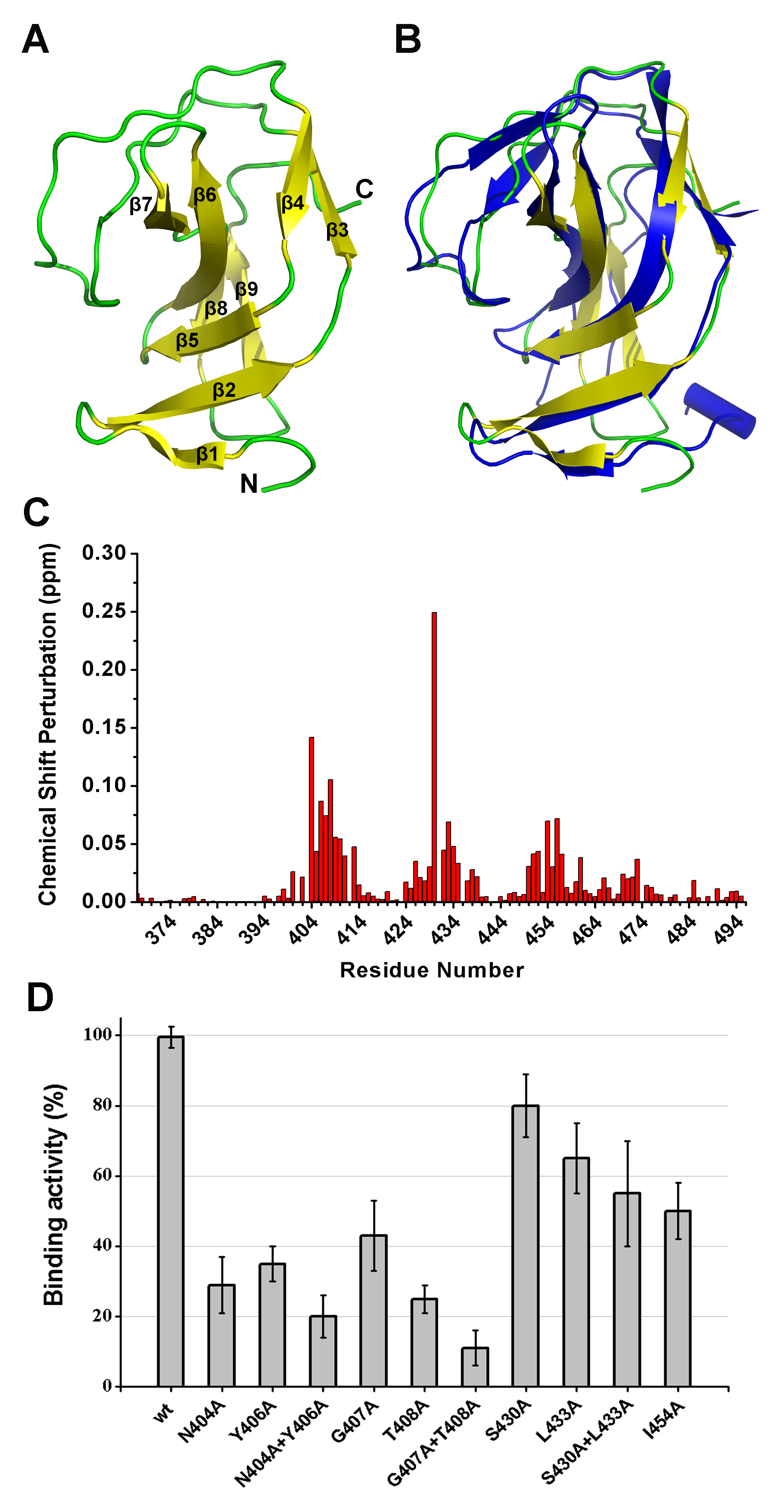 Structural and functional analysis of the LysGH15 SH3b domain.
