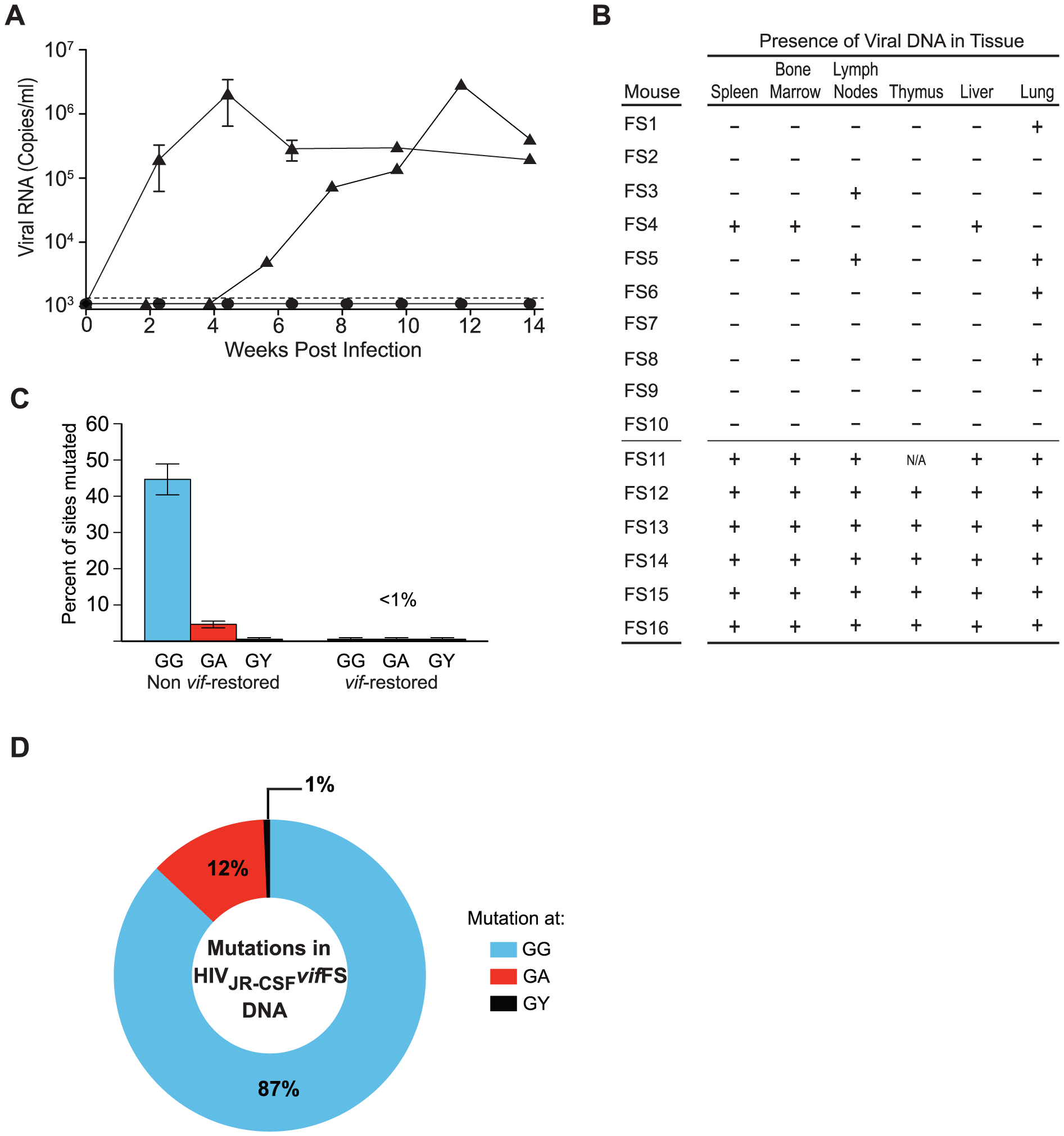 Human APOBEC3 exerts a strong selective pressure on HIV-1<sub>JR-CSF</sub> containing a frameshift in <i>vif</i>.