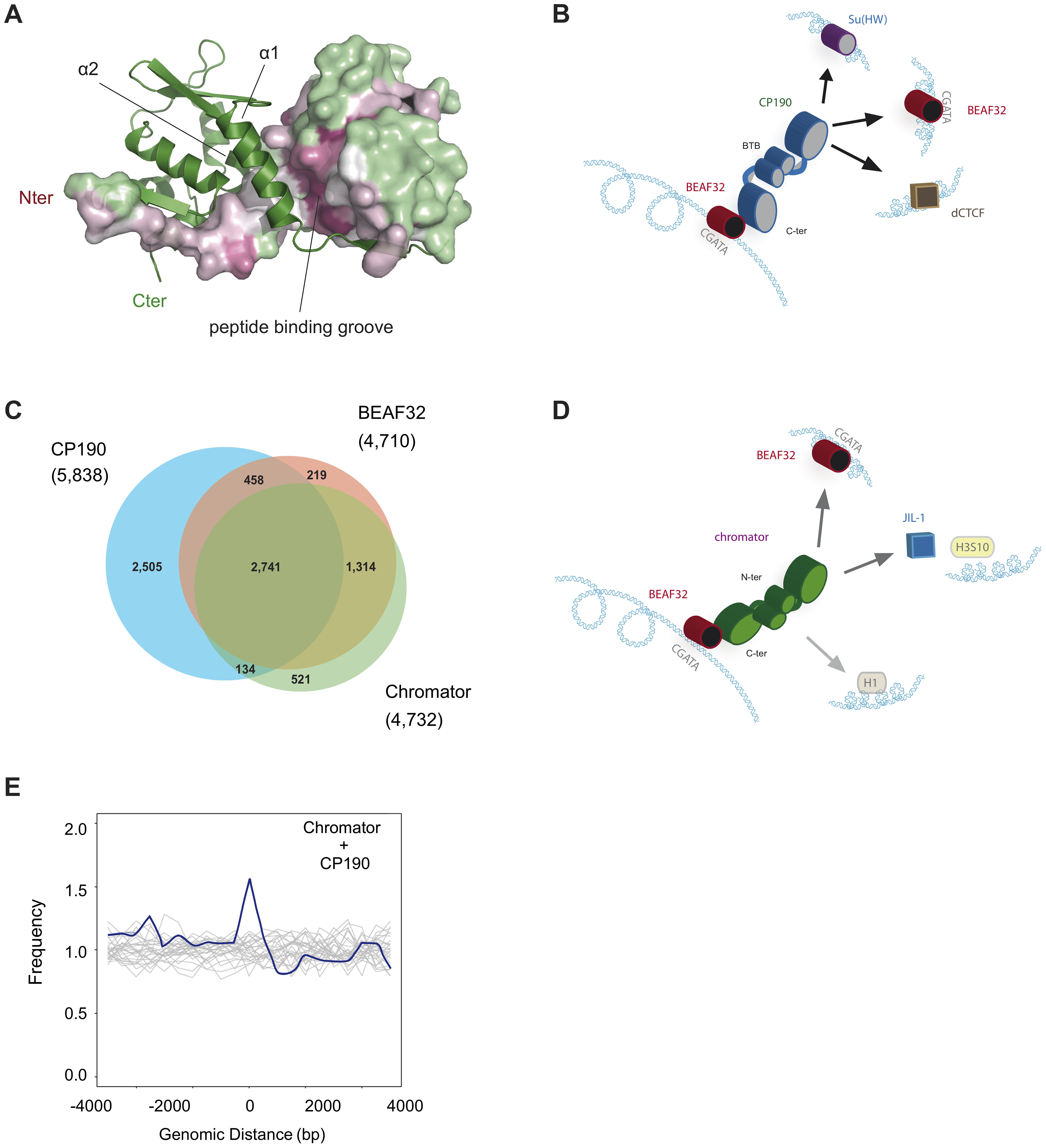 Structure of CP190-BTB/POZ, genome-wide localization of insulator factors at long-range contacts, and models.