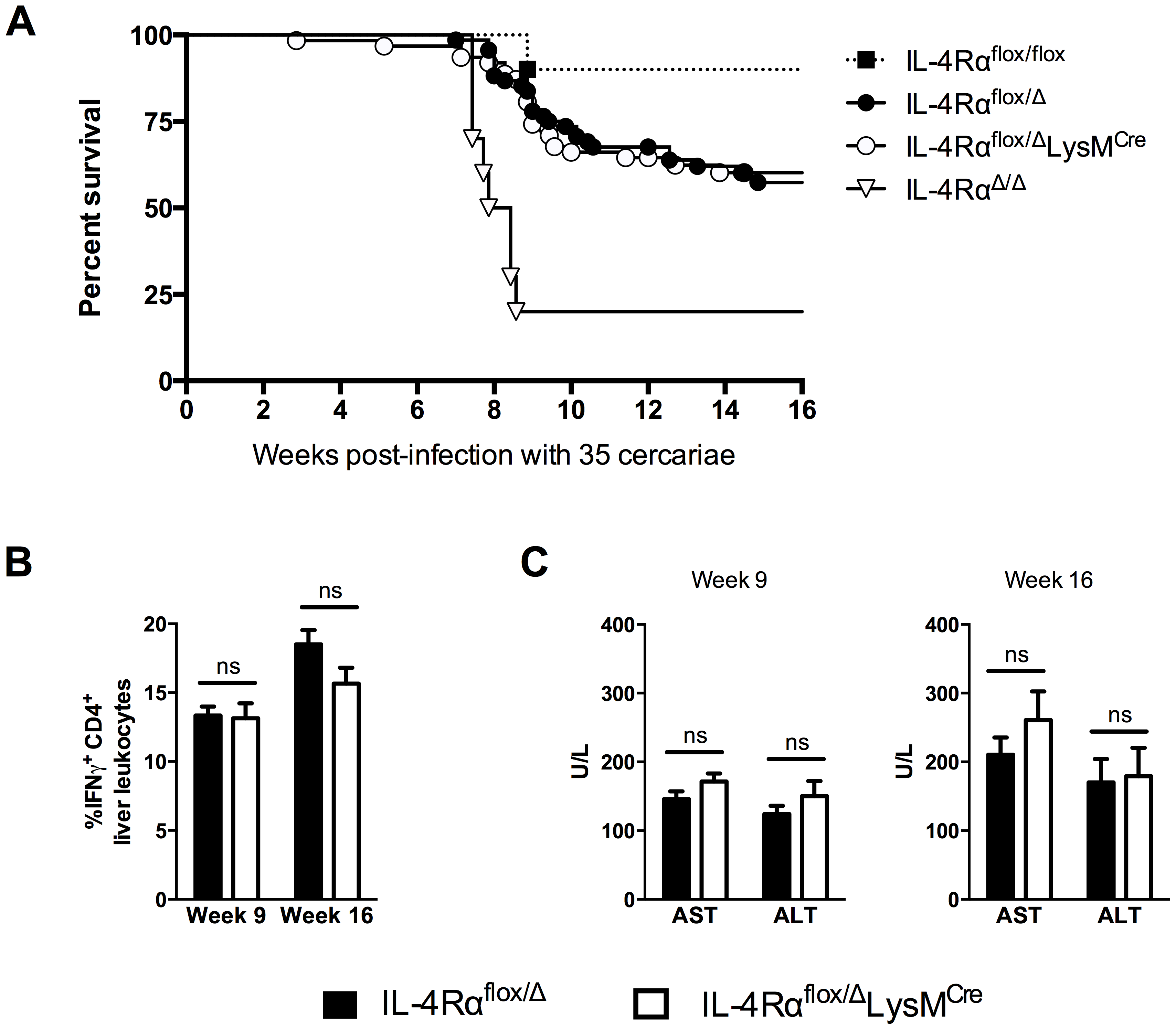 Surviving chronic <i>S. mansoni</i> infection depends on <i>Il4rα</i> allele, not LysM<sup>Cre</sup> expression.
