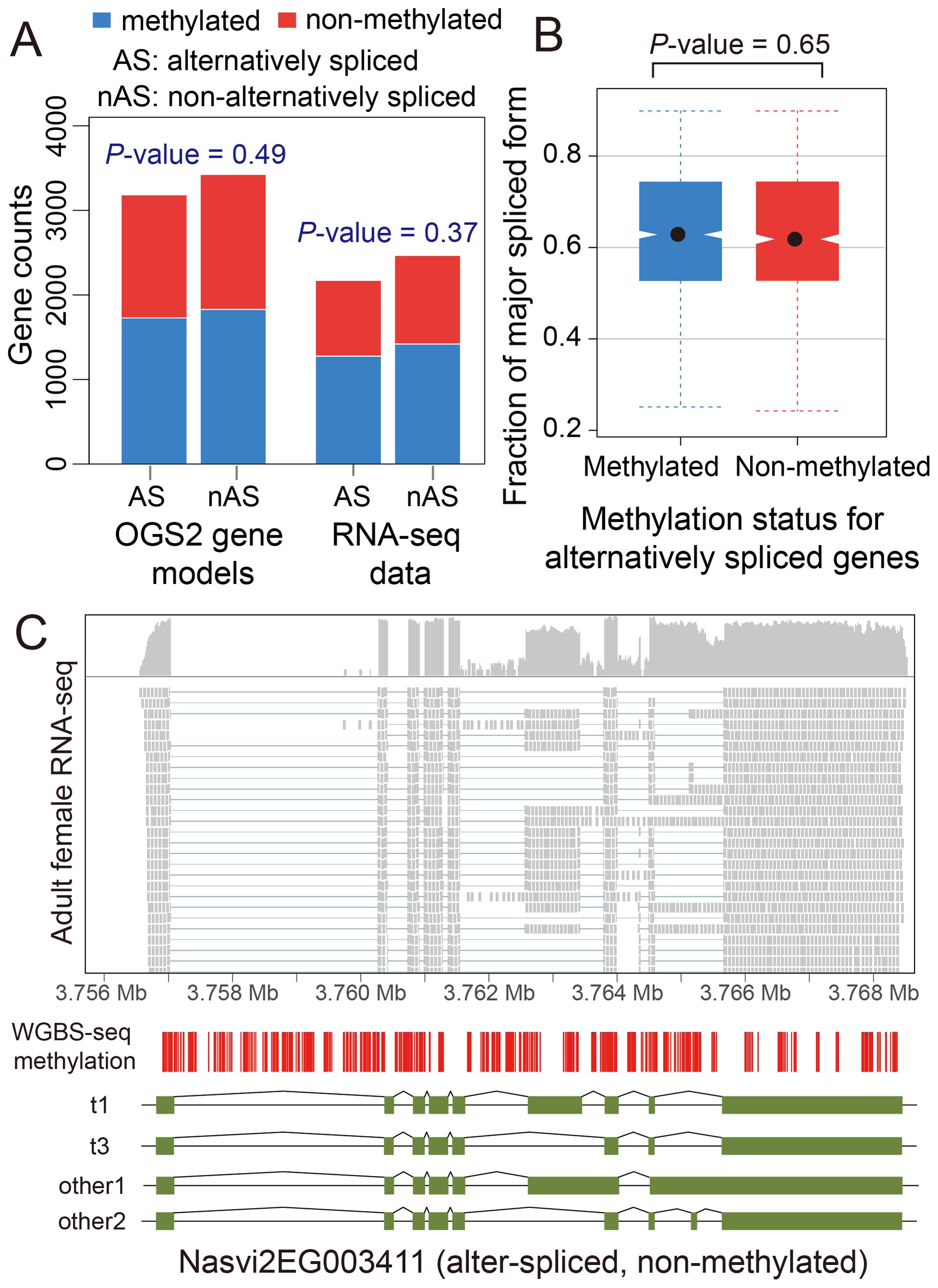 DNA methylation and alternative splicing.