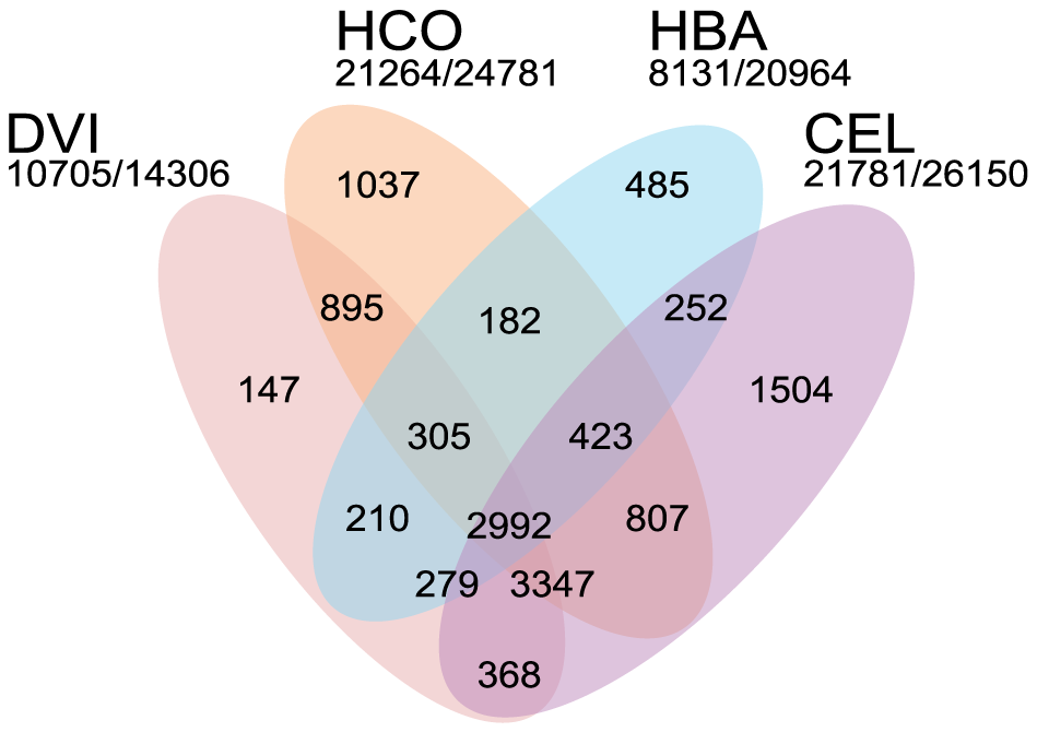 Comparison of the <i>Dictyocaulus viviparus</i> proteome to that of other rhabditid nematodes.