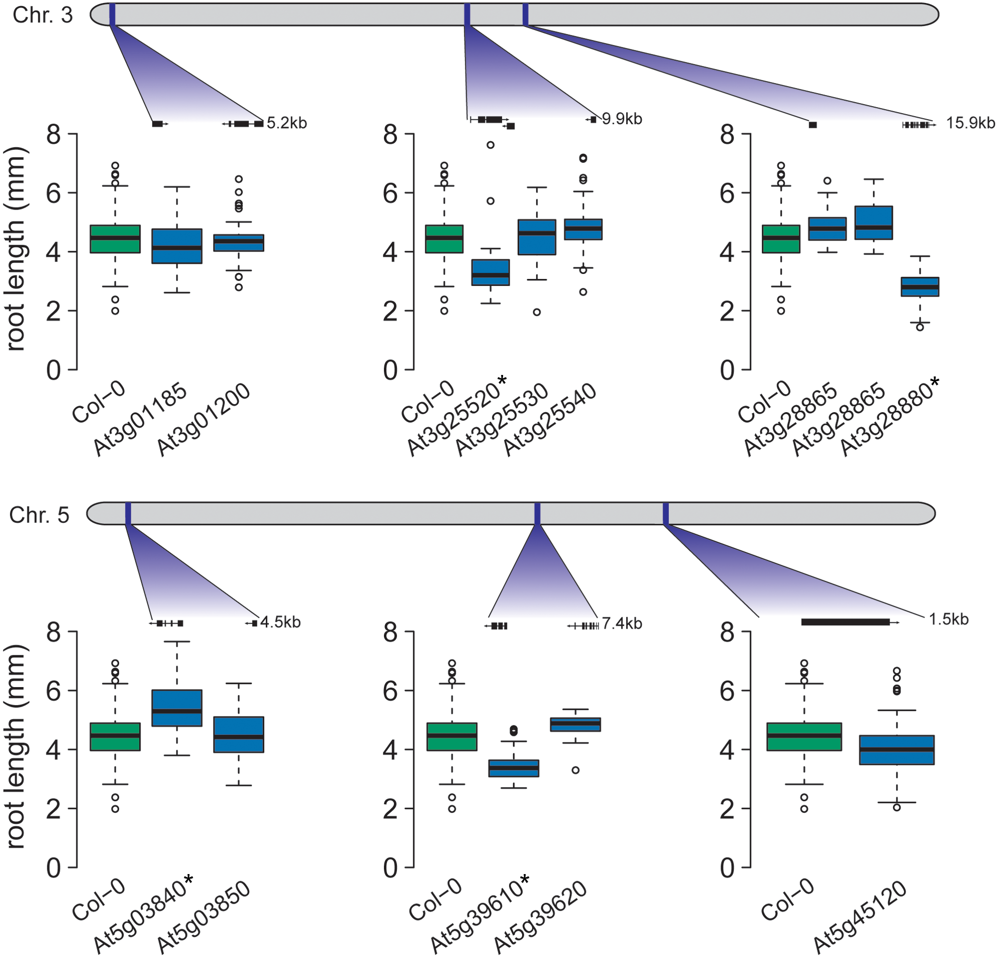 Four candidate genes exhibit altered root growth in T-DNA insertion lines.