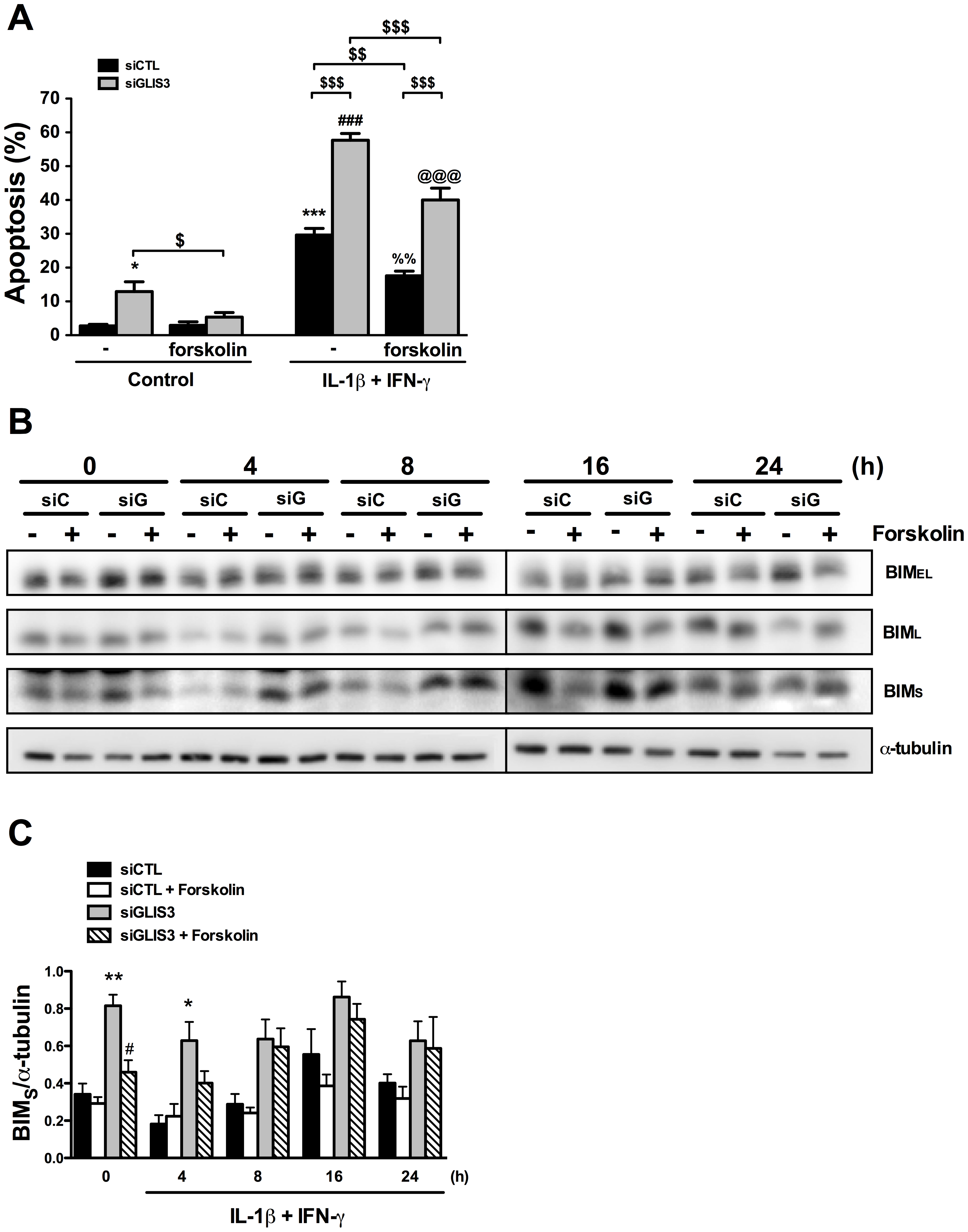 Forskolin partially prevents apoptosis following <i>GLIS3</i> KD.