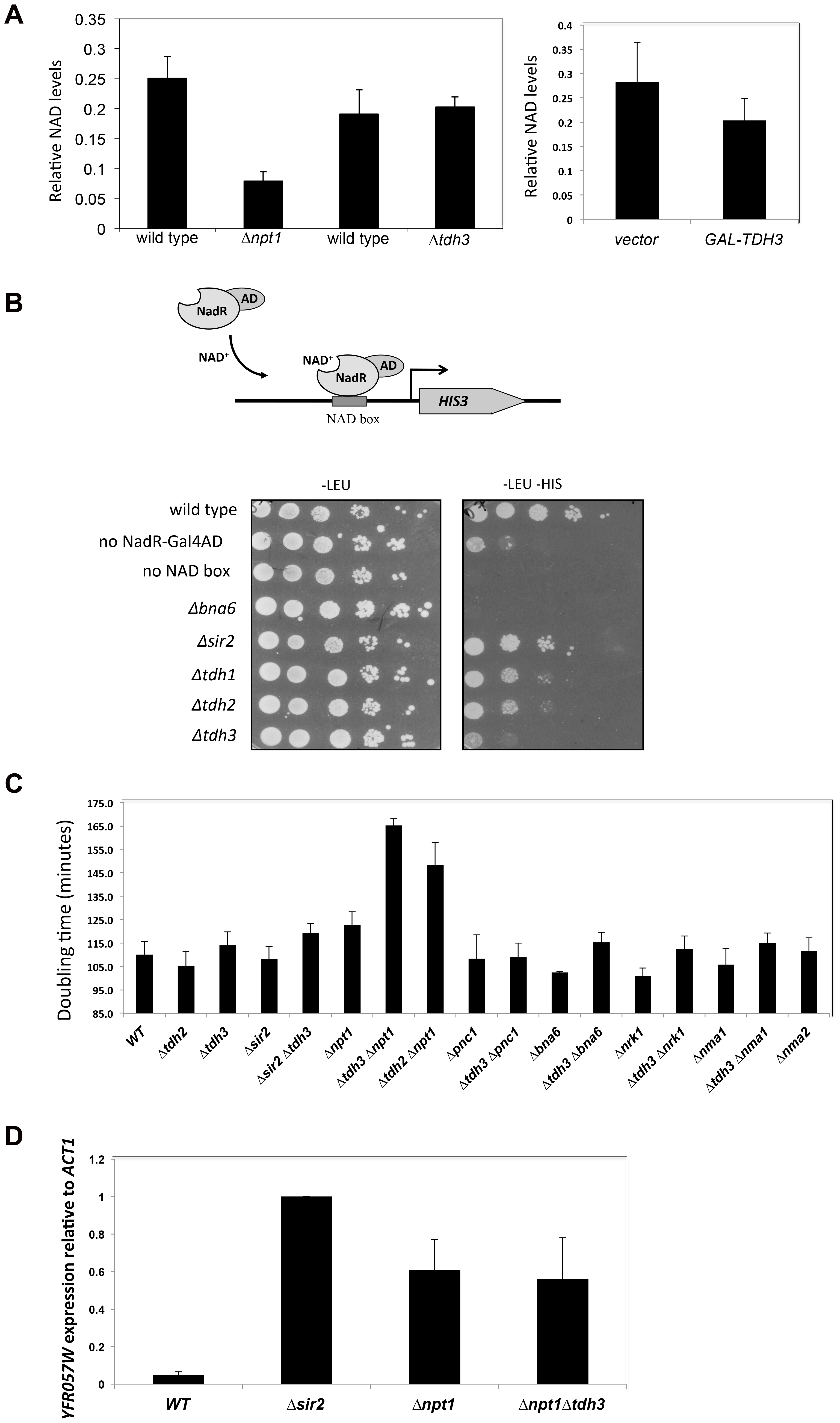 Tdh3 affects nuclear NAD<sup>+</sup> levels in yeast.