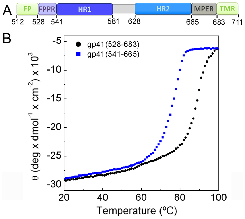 FPPR and MPER increase the melting temperature of gp41.