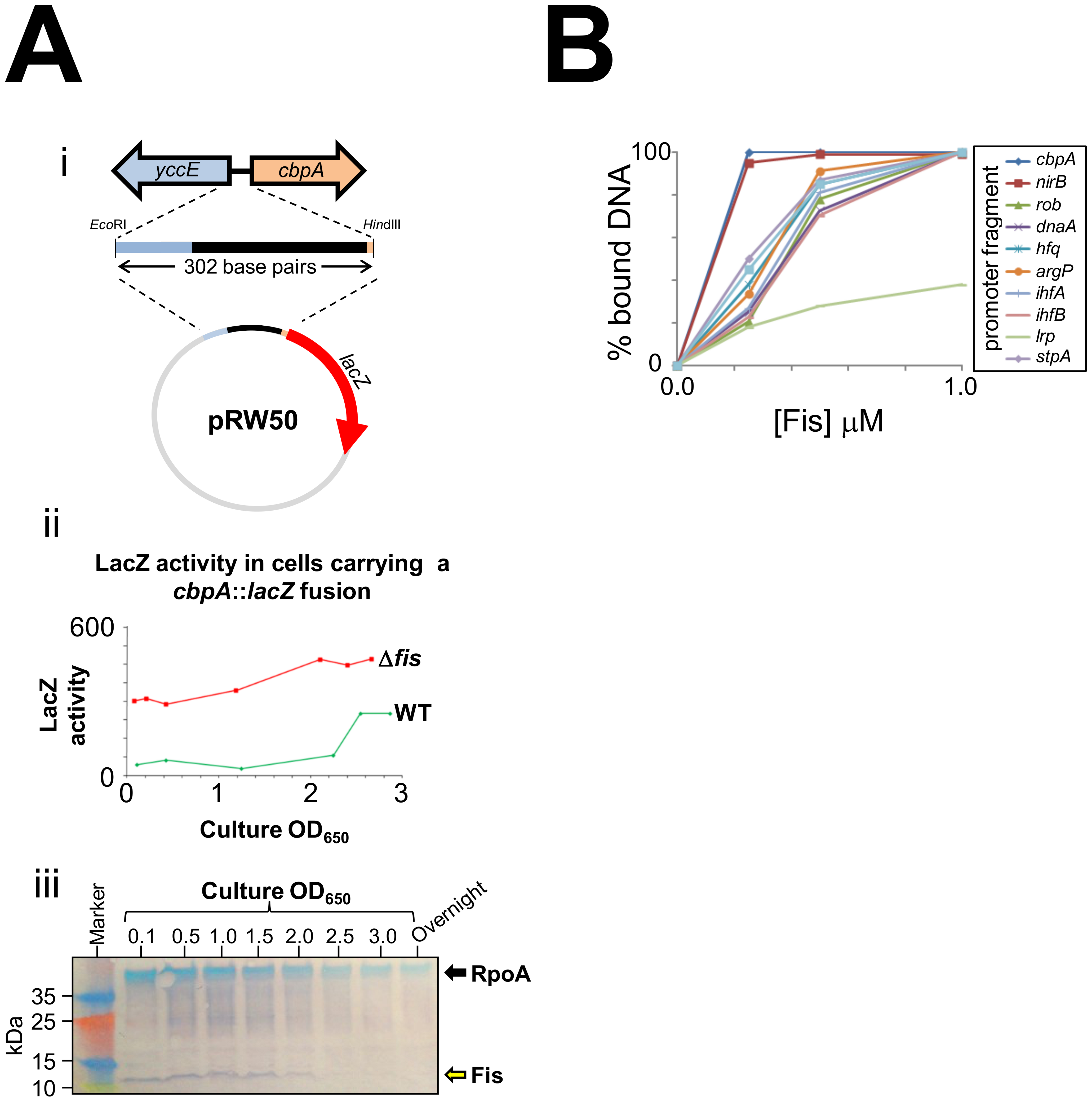 CbpA expression is uncoupled from growth-phase in a <i>fis</i> mutant.