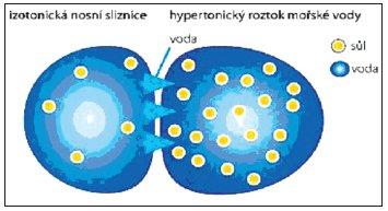 Interakce mezi izotonickou nosní sliznicí a hypertonickym roztokem.