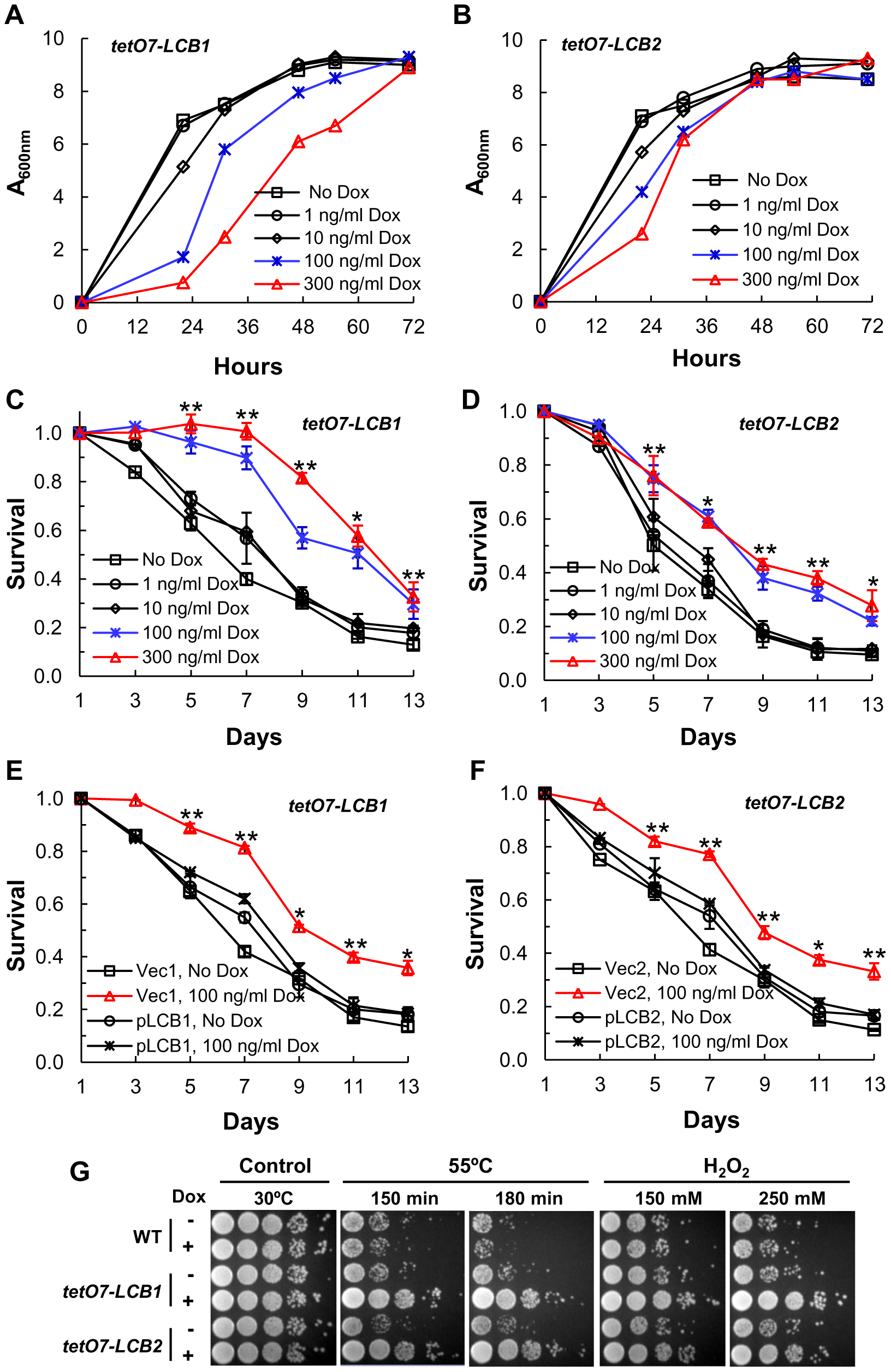 Down-regulating sphingolipid synthesis increases CLS.