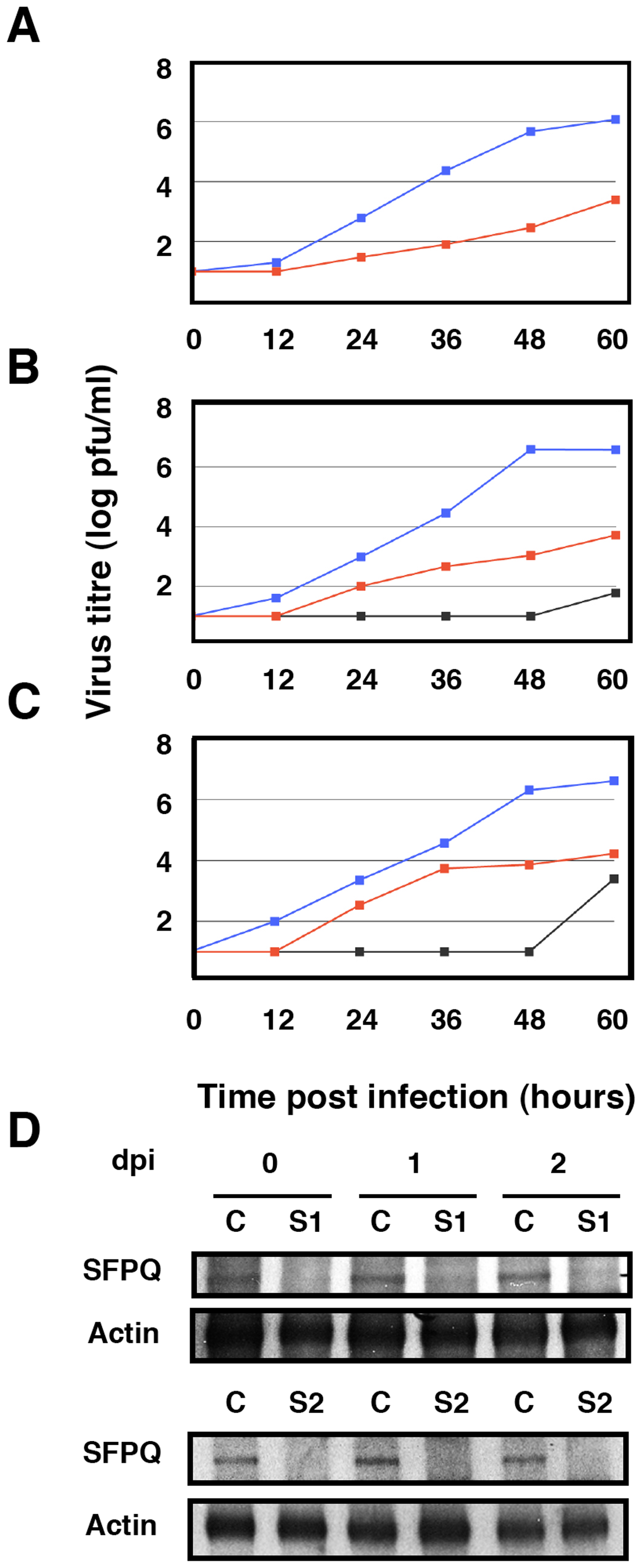 Kinetics of influenza virus multiplication in SFPQ/PSF-silenced cells.