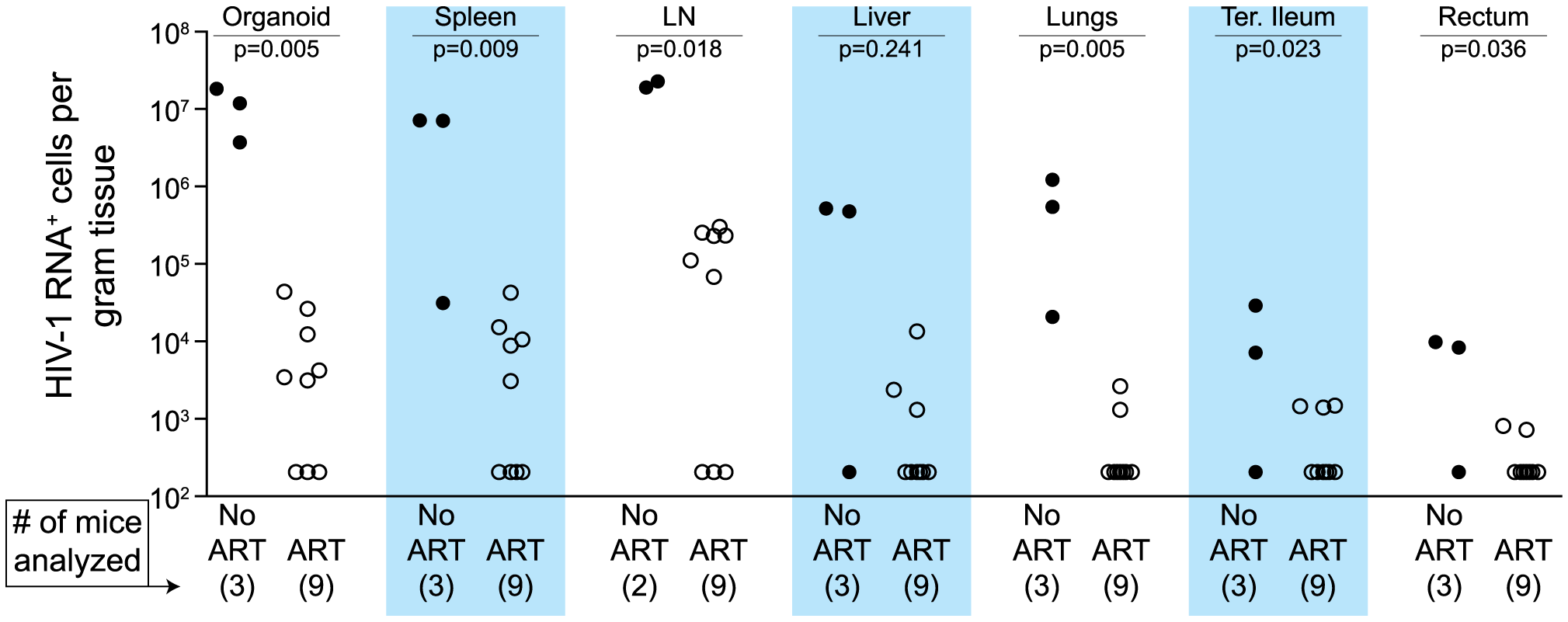 Durable reduction of the number of vRNA<sup>+</sup> cells occurs during ART.