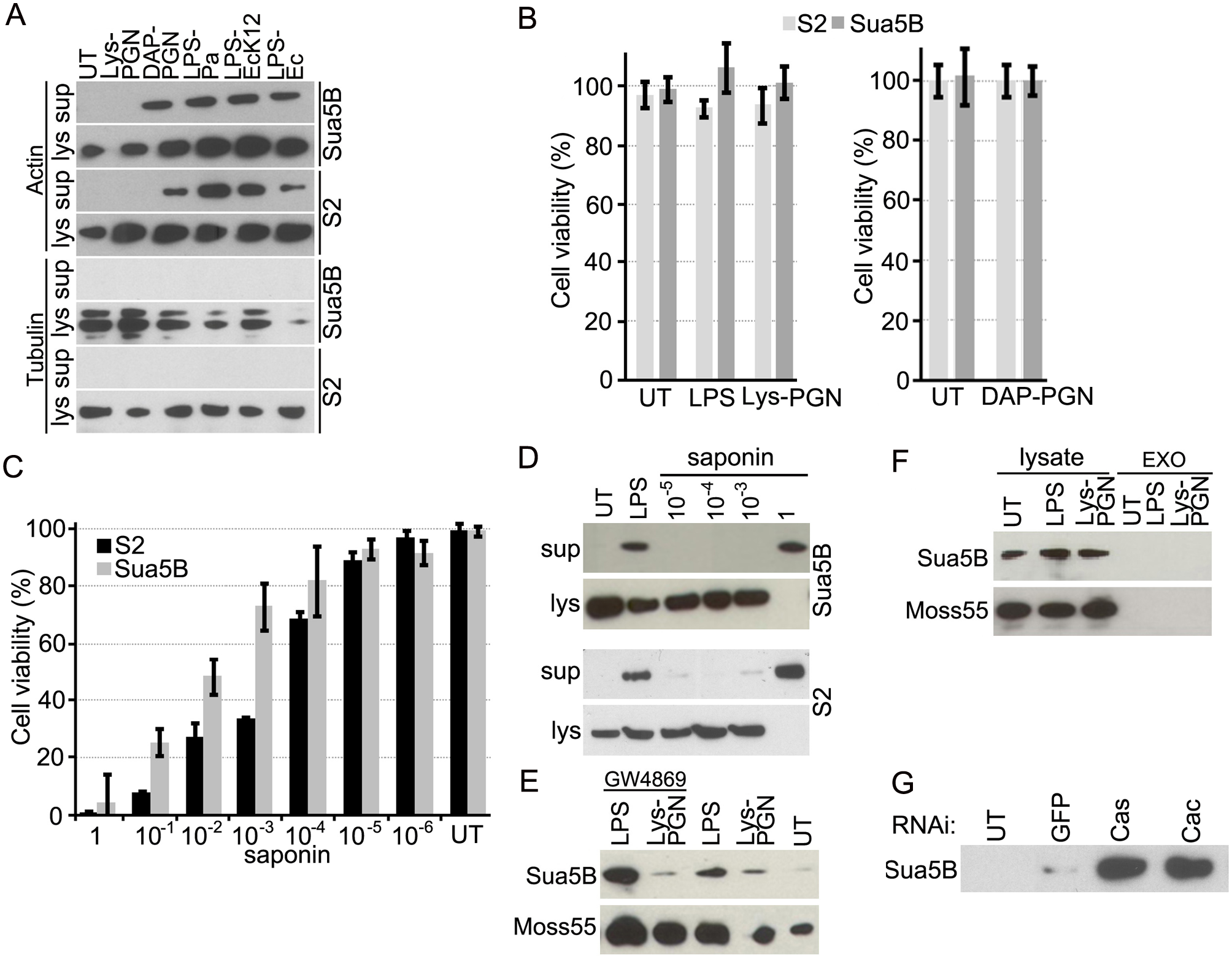 Actin is secreted into the cell culture supernatant fraction upon immune challenge via an exosome independent mechanism that is regulated by immune pathways.