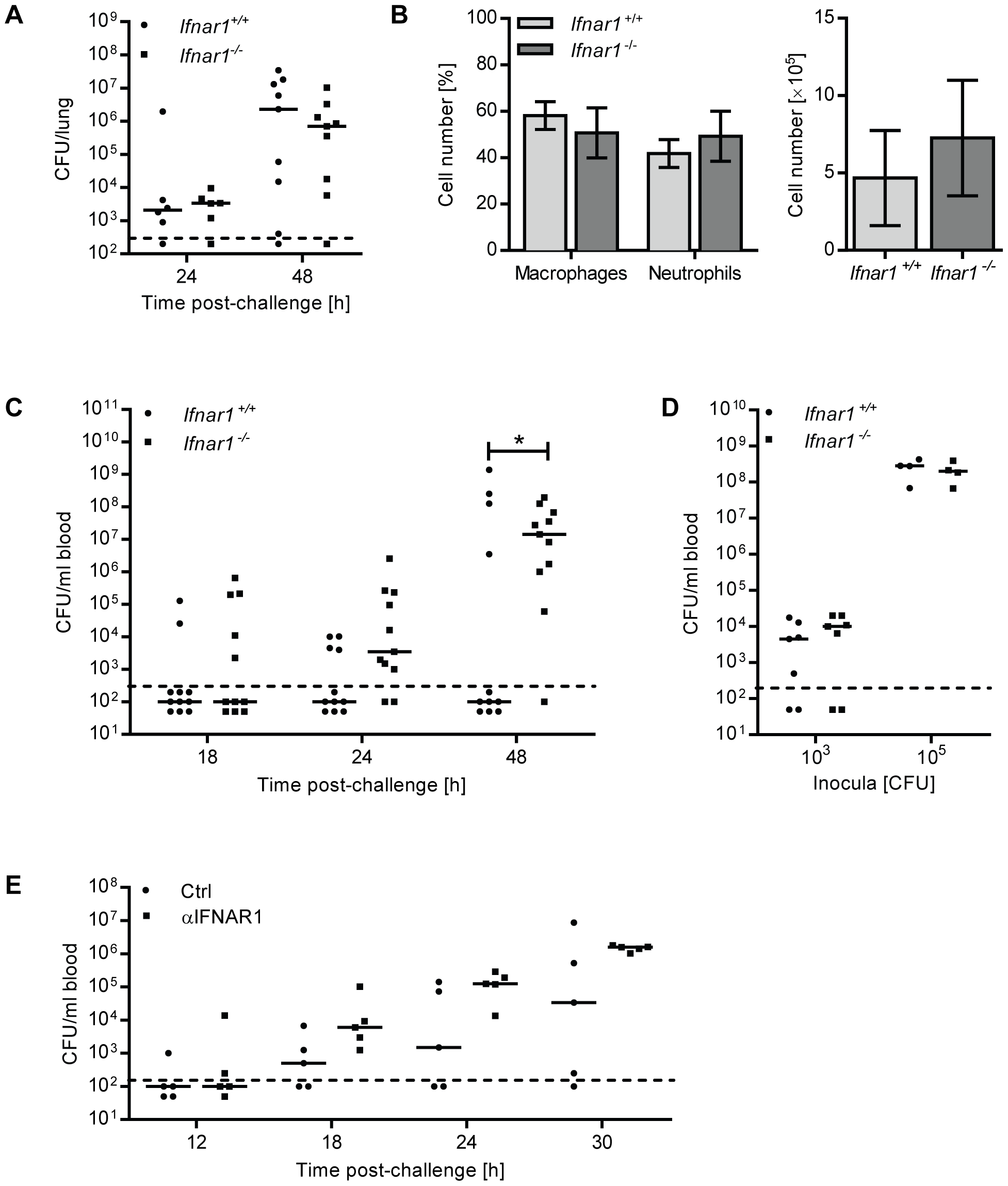 <i>Ifnar1<sup>−/−</sup></i> mice and anti-IFNAR1treated mice are hypersusceptible to developing bacteremia.