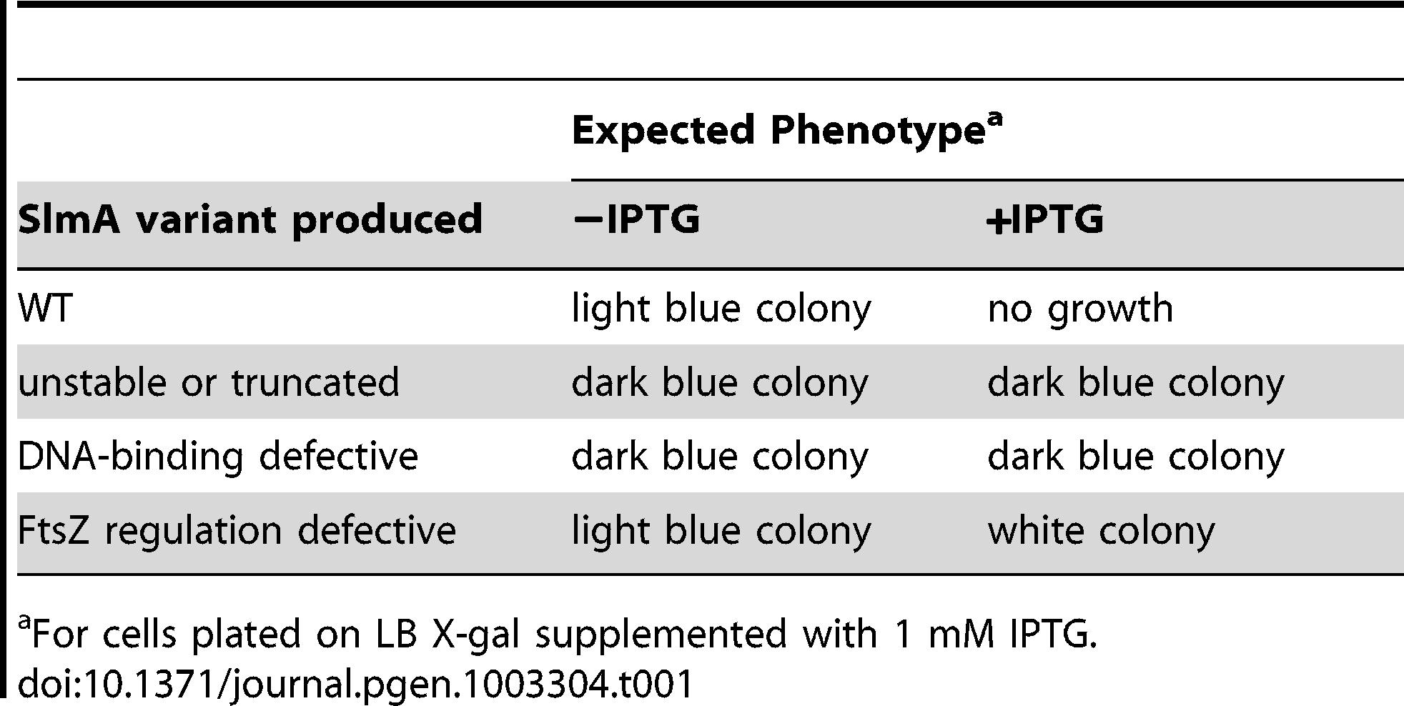 Expected colony phenotypes for <i>slmA</i> mutants in strain HC328/pHC534 [Δ<i>slmA</i> P<sub>sbs</sub>::<i>lacZ</i>/pUC-2xSBS].