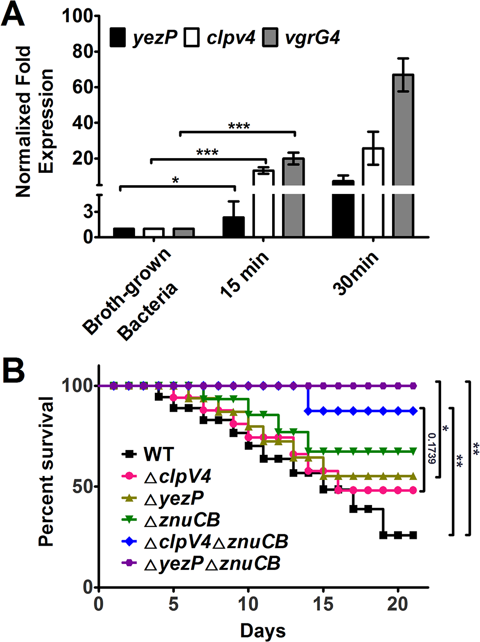 The expression of T6SS-4 is induced in macrophages and <i>Yptb</i> mutants lacking T6SS-4 or its substrate YezP are defective in virulence against mice.