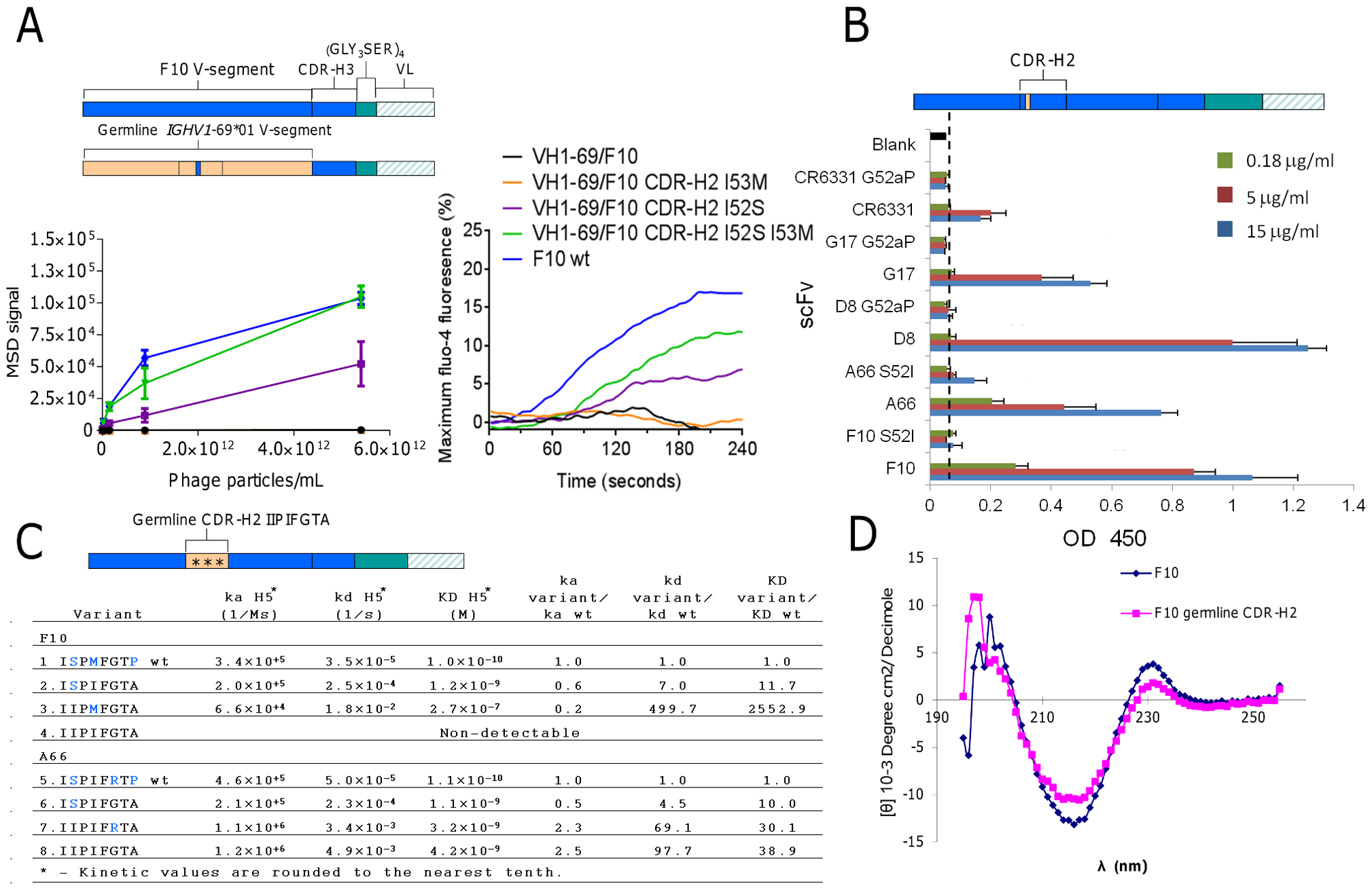 Validating the structural role of Ser52 in HV1-69-sBnAbs.