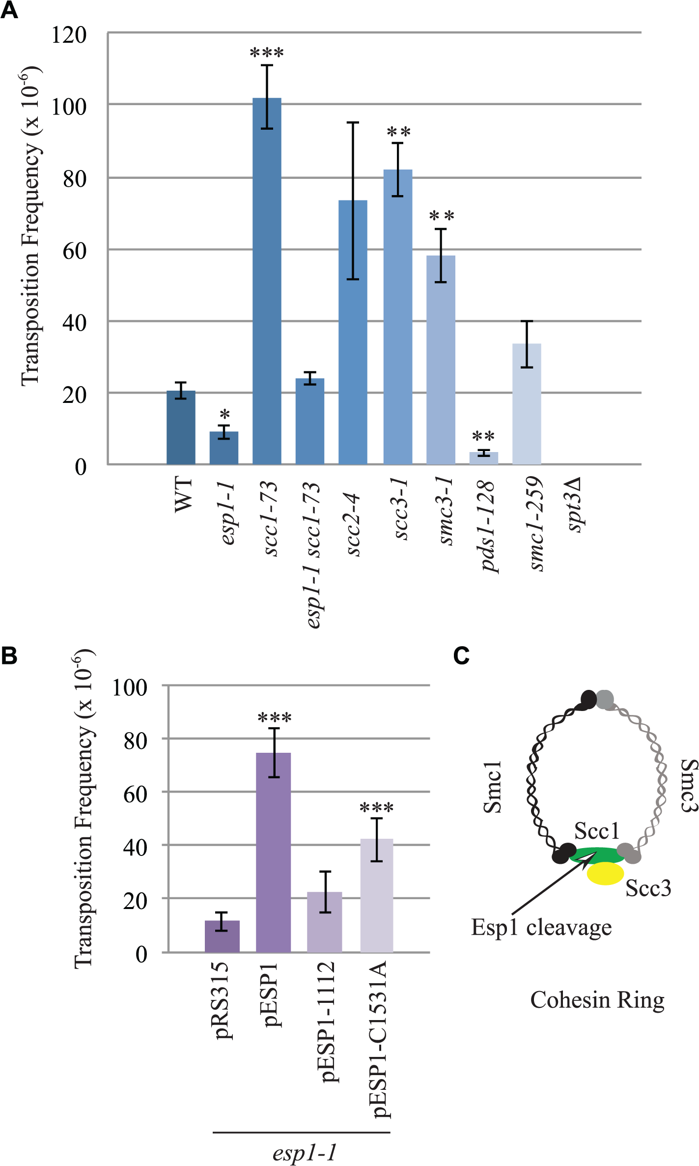 <i>esp1</i> and <i>pds1</i> mutants have decreased, whereas cohesin mutant have increased Ty1 mobility.