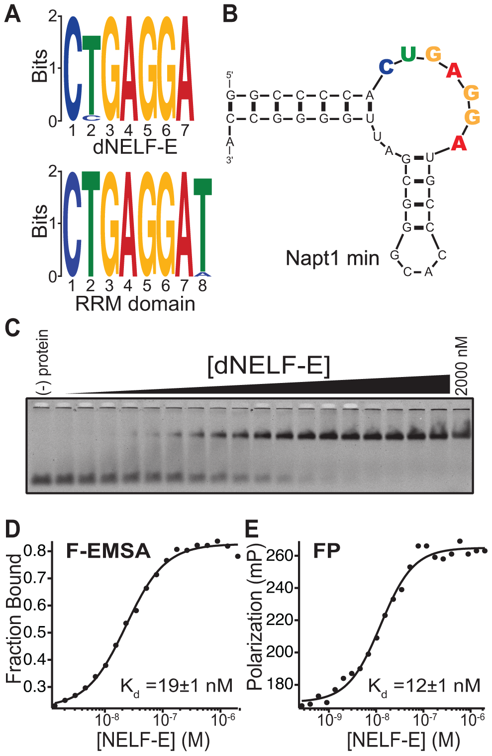 Identification of the NELF-E Binding Element within high affinity aptamers.