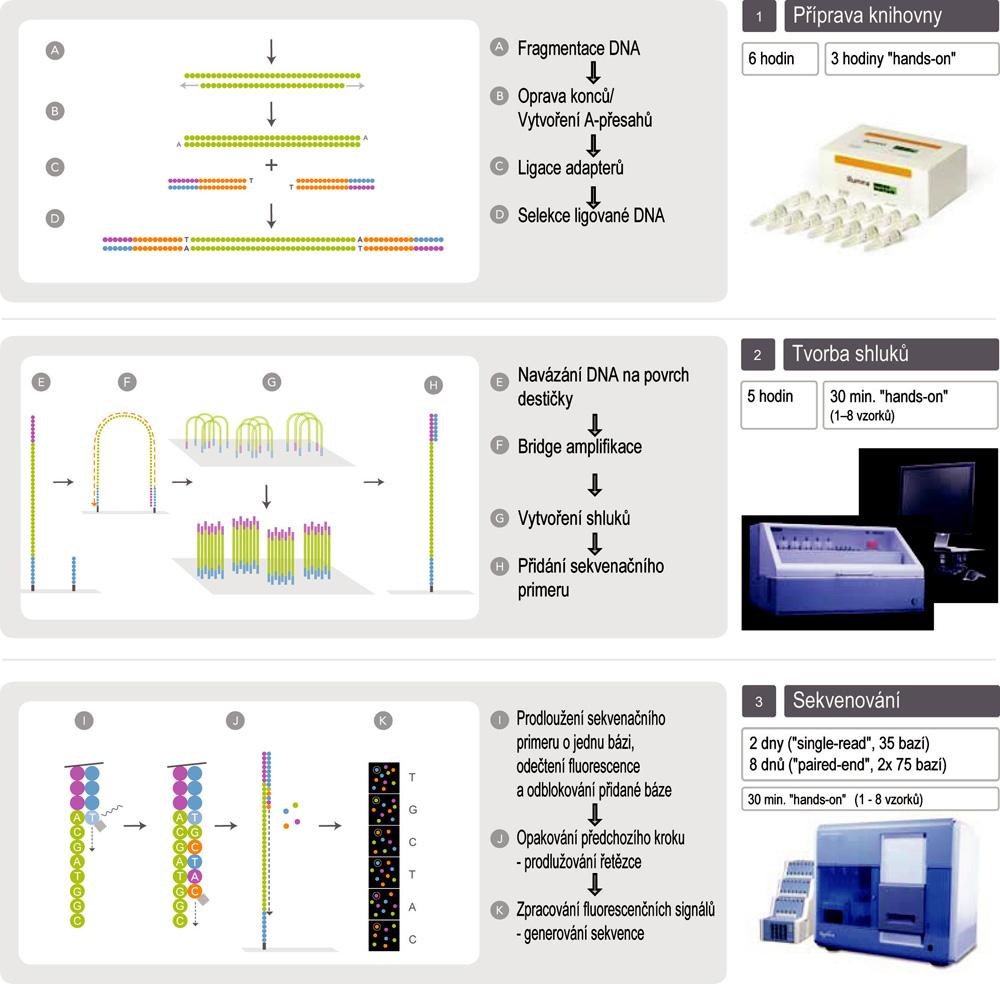 Schéma sekvenování na přístroji Illumina Genome Analyzer IIx (upraveno se souhlasem firmy Illumina)