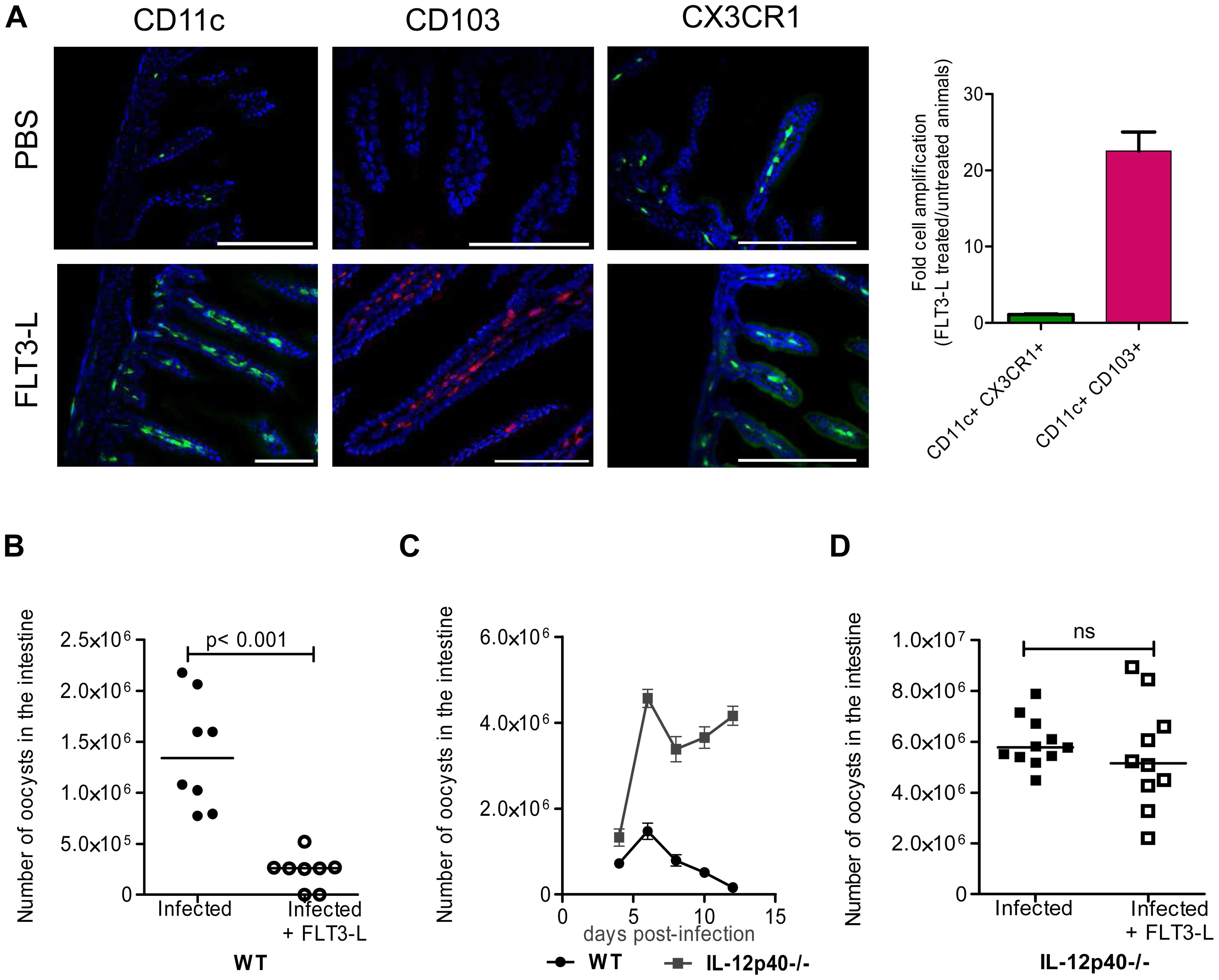 <i>In vivo</i> amplification of CD11c+ CD103+ DC by FLT3-L enhances neonatal resistance to <i>C. parvum</i> infection.