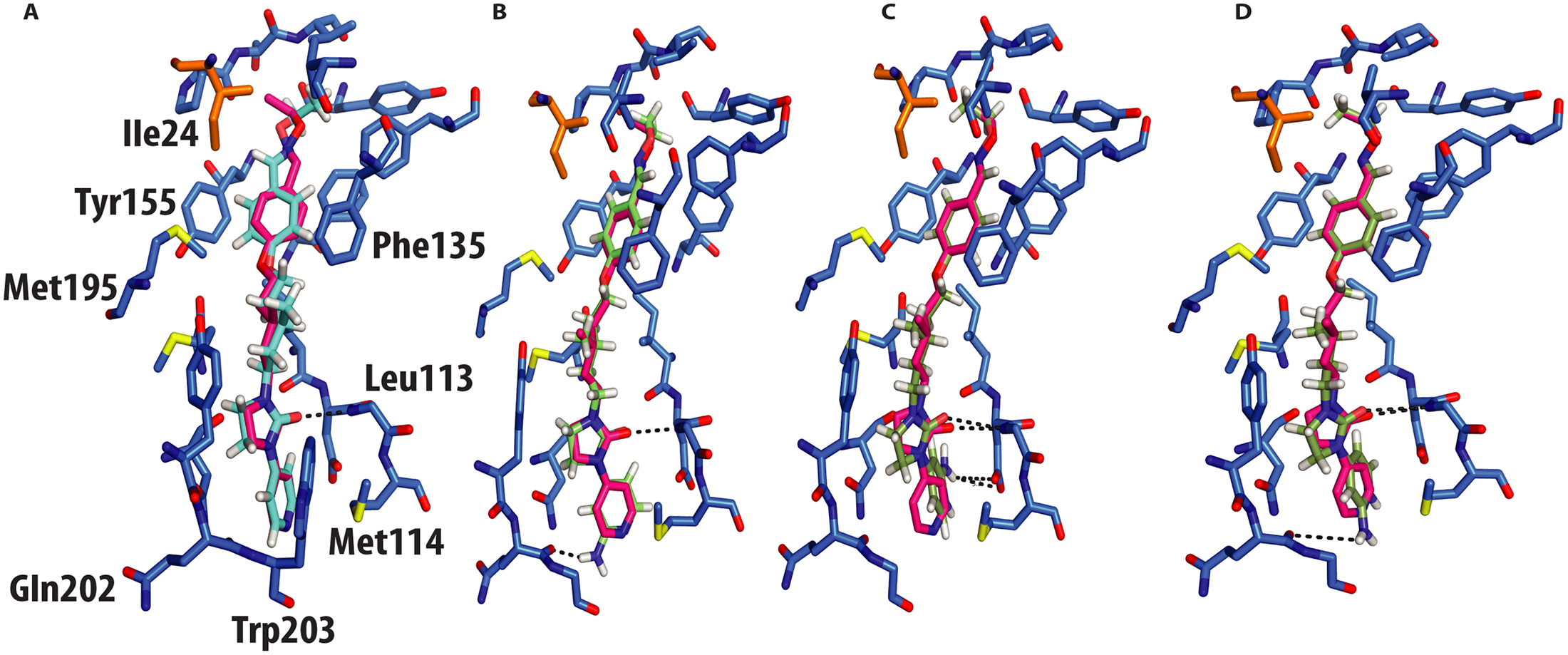 Molecular docking of GPP3 and NLD into the VP1 pocket.