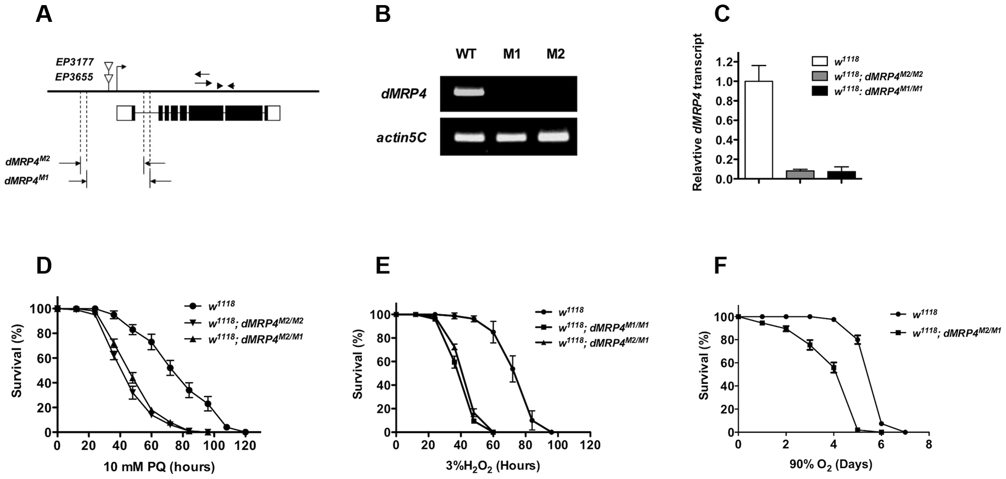 <i>dMRP4</i> is required for oxidative stress resistance.