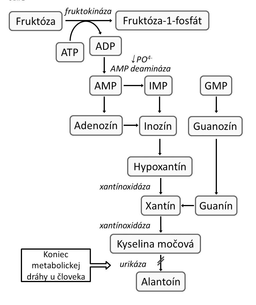 Schéma metabolizmu purínov u človeka a fruktózou indukovanej tvorby kyseliny močovej (KM). Fosforylácia fruktózy ketohexokinázou v pečeni nie je regulovaná spätnou väzbou, čo má pri vysokom príjme fruktózy za následok intracelulárnu depléciu adenozín trifosfátu (ATP) a anorganického fosfátu (PO4-). Deplécia anorganického fosfátu stimuluje adenozín monofosfát (AMP)-deaminázu, ktorá katalyzuje degradáciu AMP na inozín monofosfát (IMP) – prekurzor KM [4]. ADP: adenozín difosfát, GMP: guanozín monofosfát