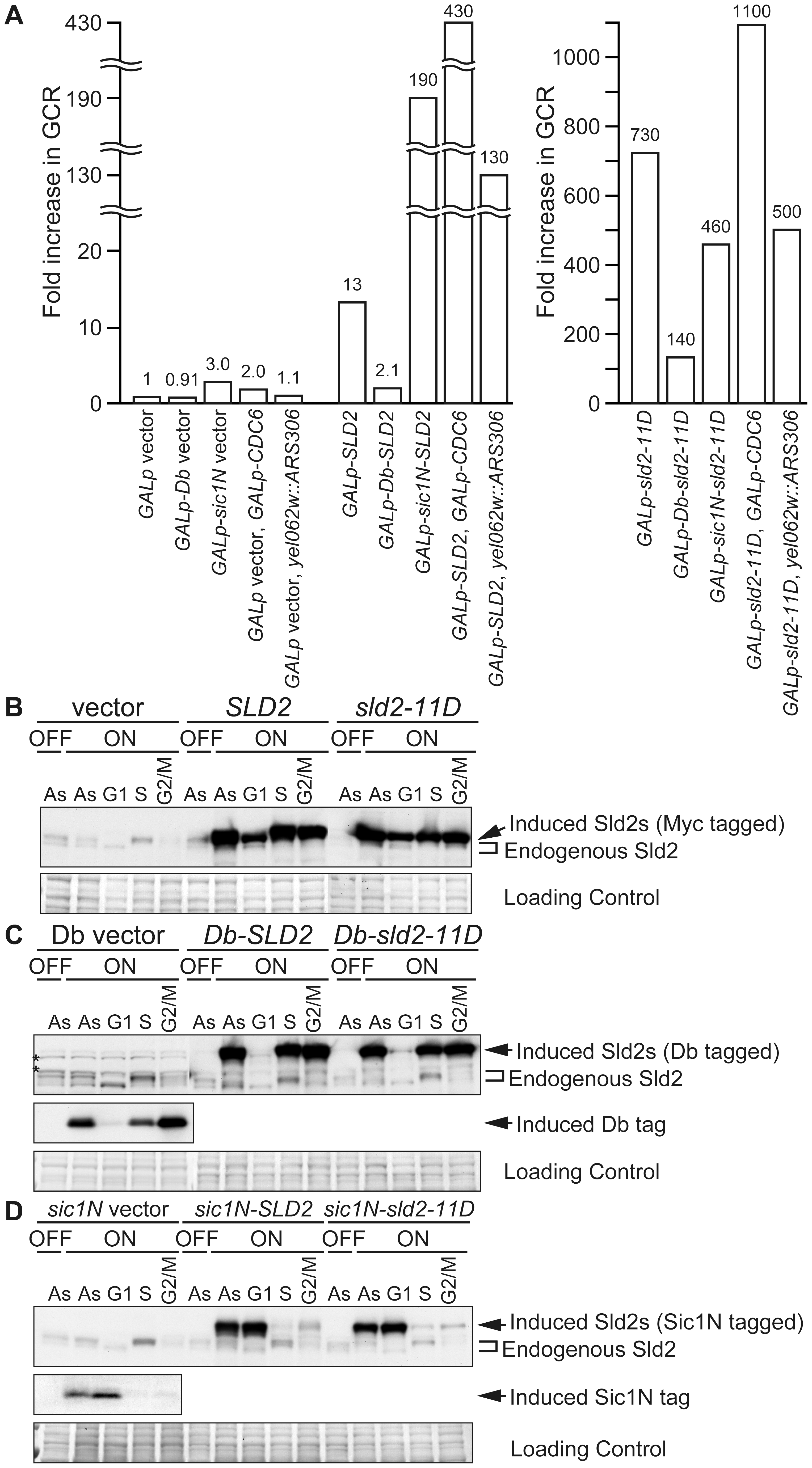 High-level expression of Sld2 in G1 induces GCR.
