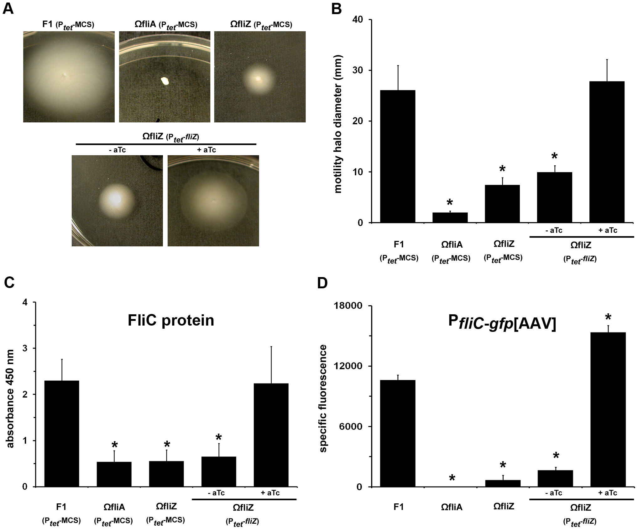 FliZ controls flagellin gene expression and motility phenotype in <i>Xenorhabdus</i>.