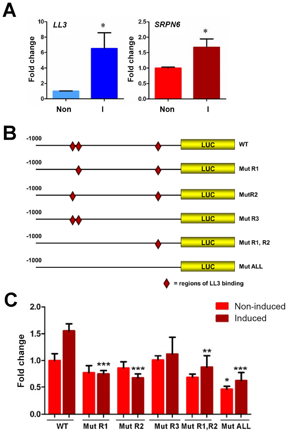 Luciferase expression in a mosquito cell line suggests the involvement of LL3 in the regulation of SRPN6 expression.