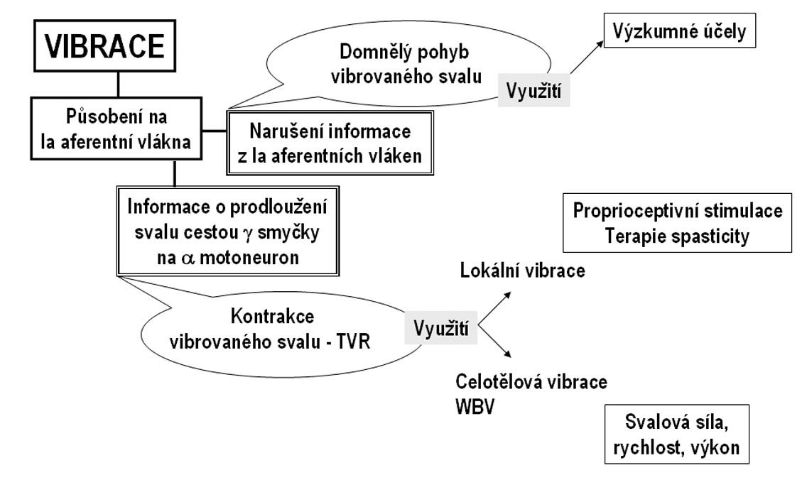 Využití vibrace v klinice pohybových poruch.