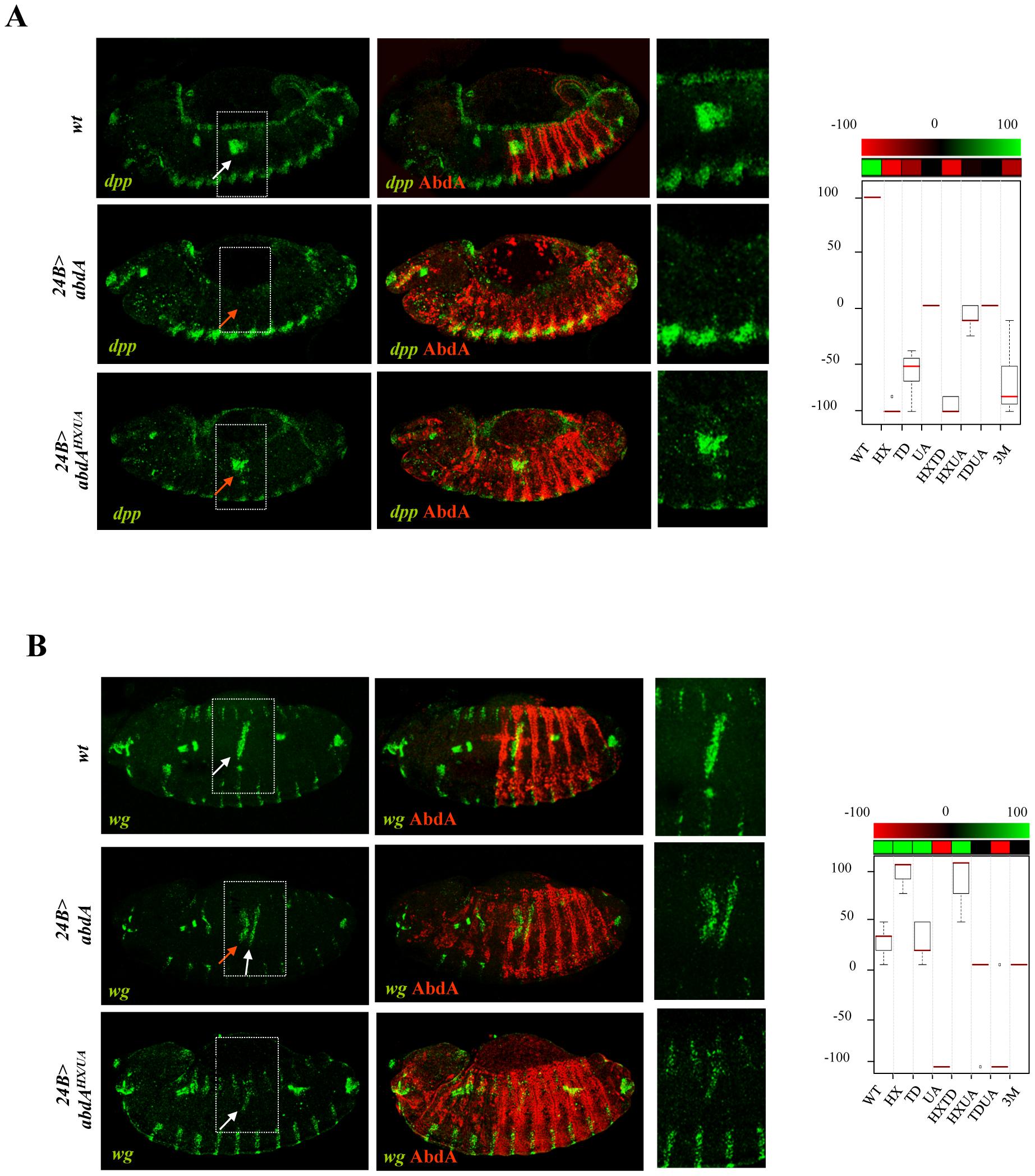 Protein domain mutations inducing neomorphic activities.