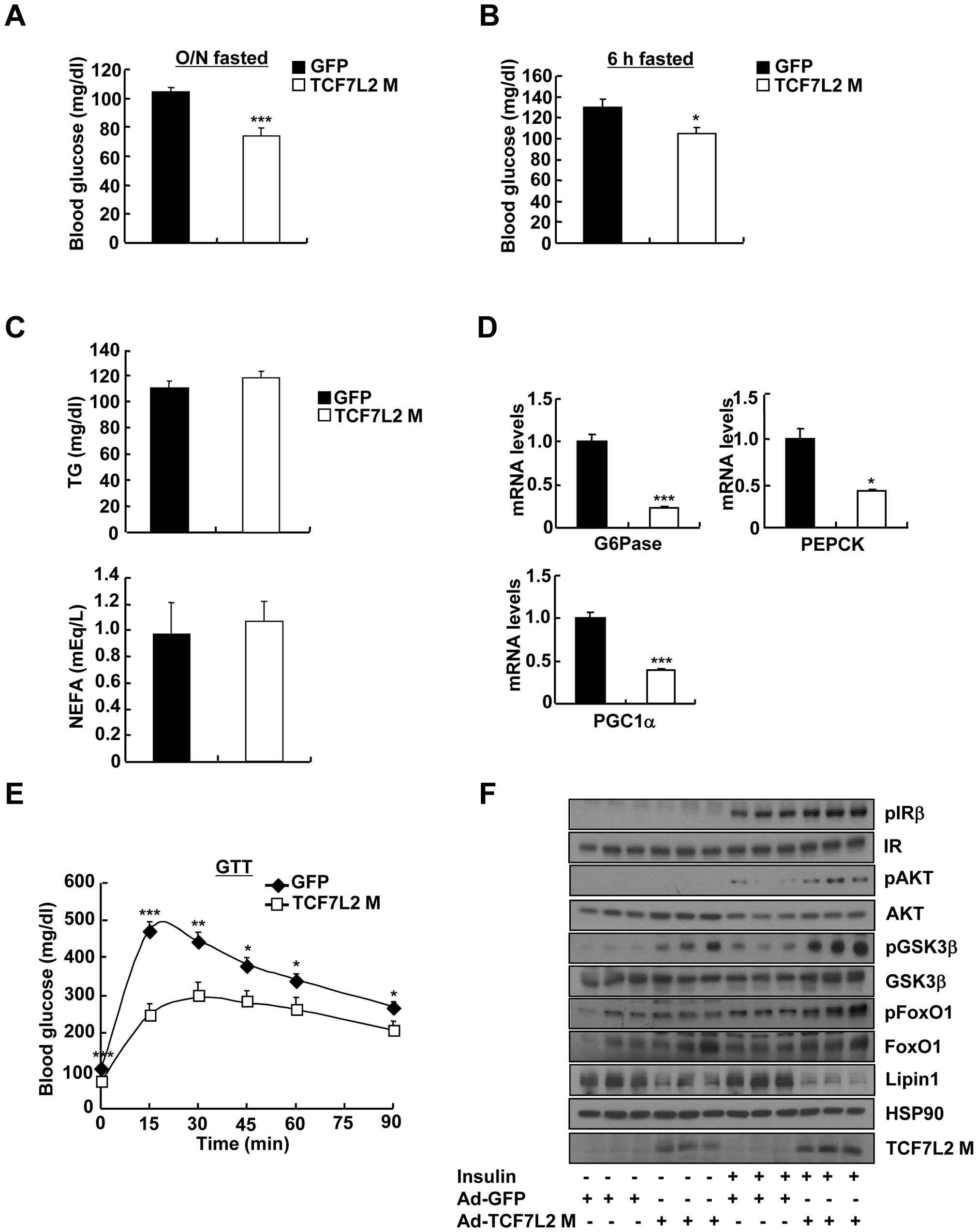 Ectopic expression of TCF7L2 in the liver alleviates impaired glucose metabolism in high-fat diet-fed mice.