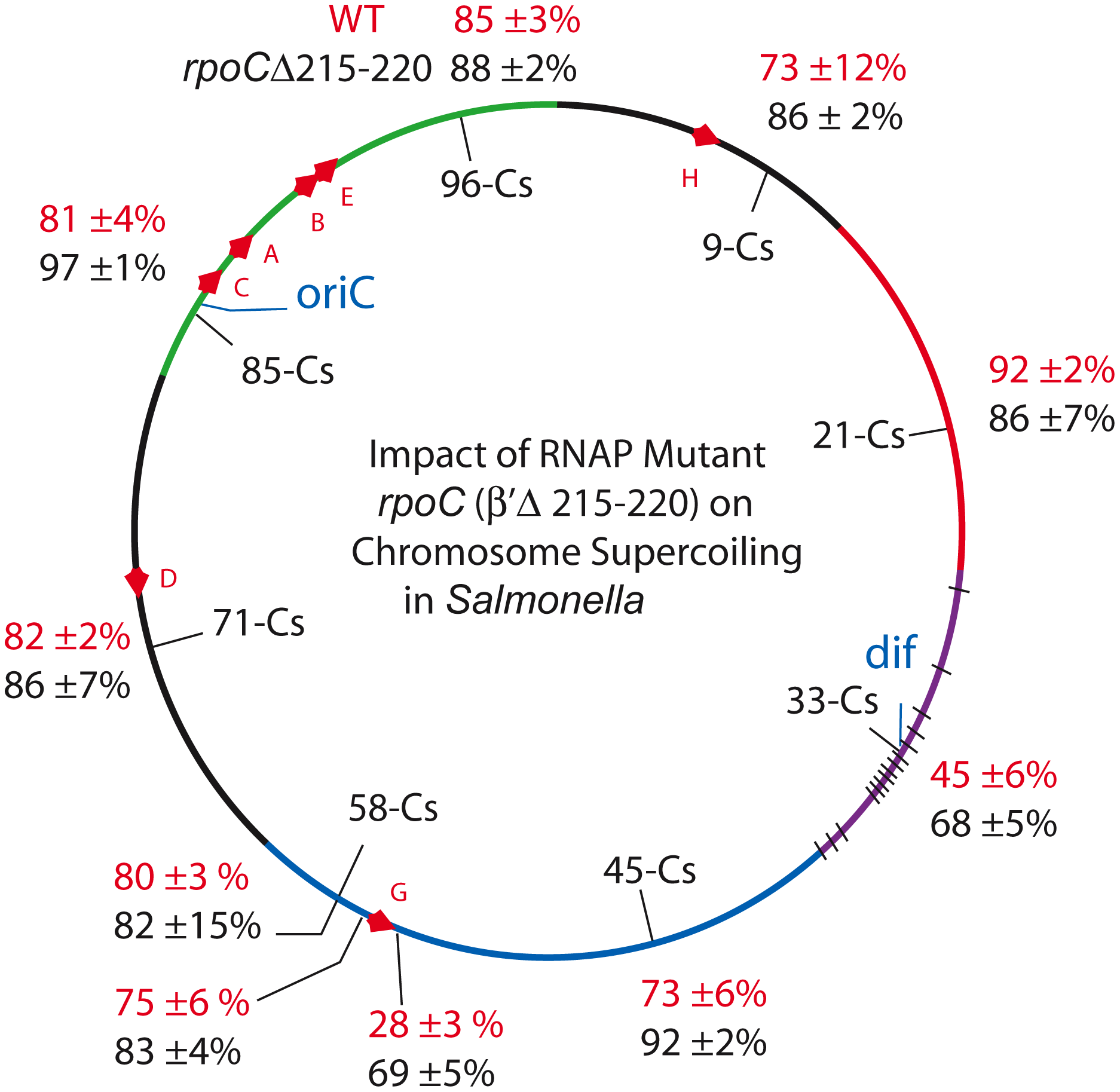 An RpoC mutant that slows transcription and mimics the stringent response in the absence of ppGpp causes global increases in resolution efficiency in the <i>Salmonella</i> chromosome.