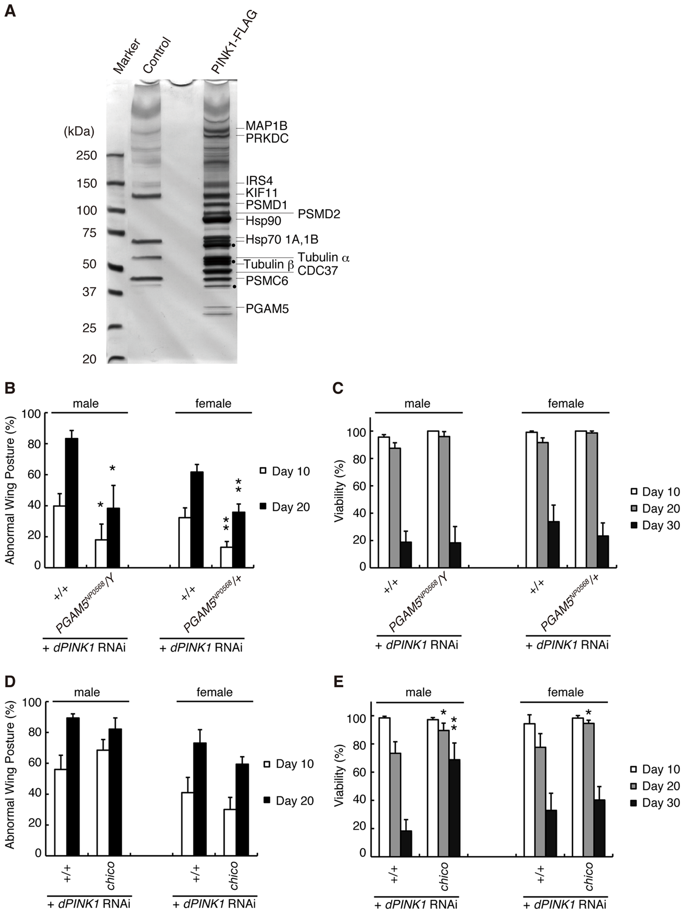 Identification of PINK1-binding proteins that modulate the phenotypes of <i>dPINK1</i> knockdown fly.