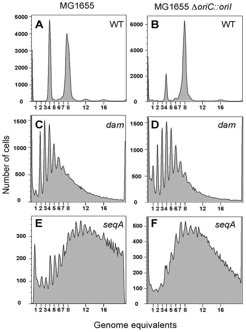 Flow cytometric analysis of DNA content in <i>E. coli</i>.