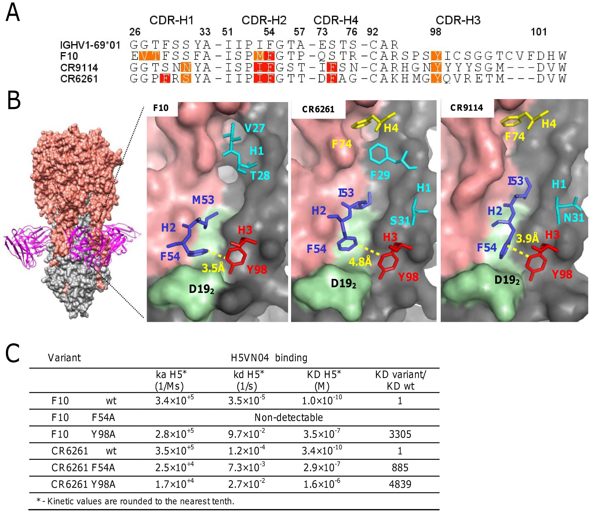 The structural basis of HV1-69-sBnAb similarity.