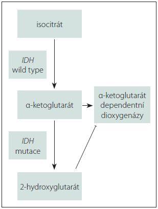 Schéma 1. Vznik 2-hydroxyglutarátu a jeho vliv na DNA dioxygenázy (5-metyl-cytosin dioxygenázy, histon demetylázy). Převzato z [7].