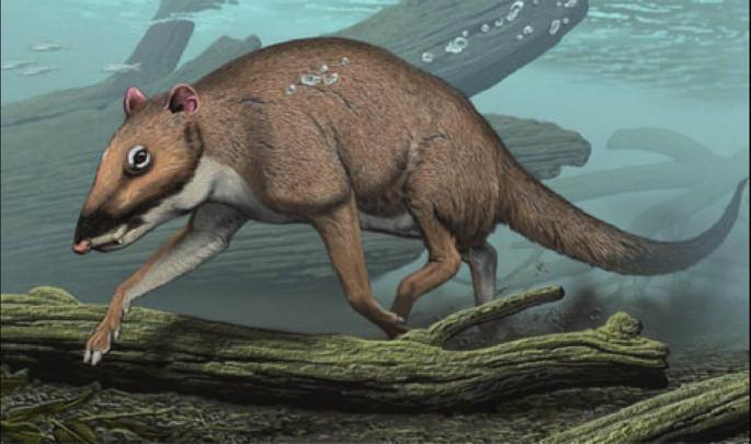 Indohyus, raný pravděpodobný vývojový předchůdce velryb– možný zevní vzhled, umělecká rekonstrukce. (Geisler a Theodor, 2009, Thewissen et al., 2009).