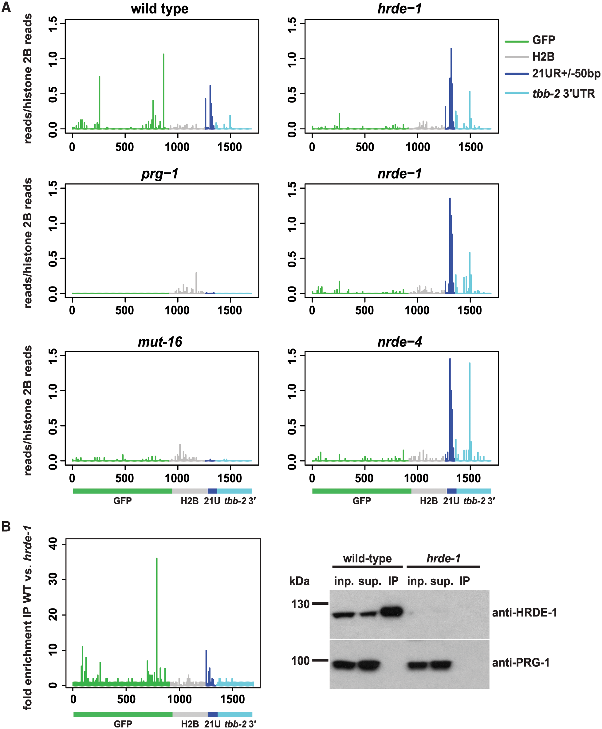 22G-RNAs distal to piRNA target sites require the nuclear RNAi pathway.