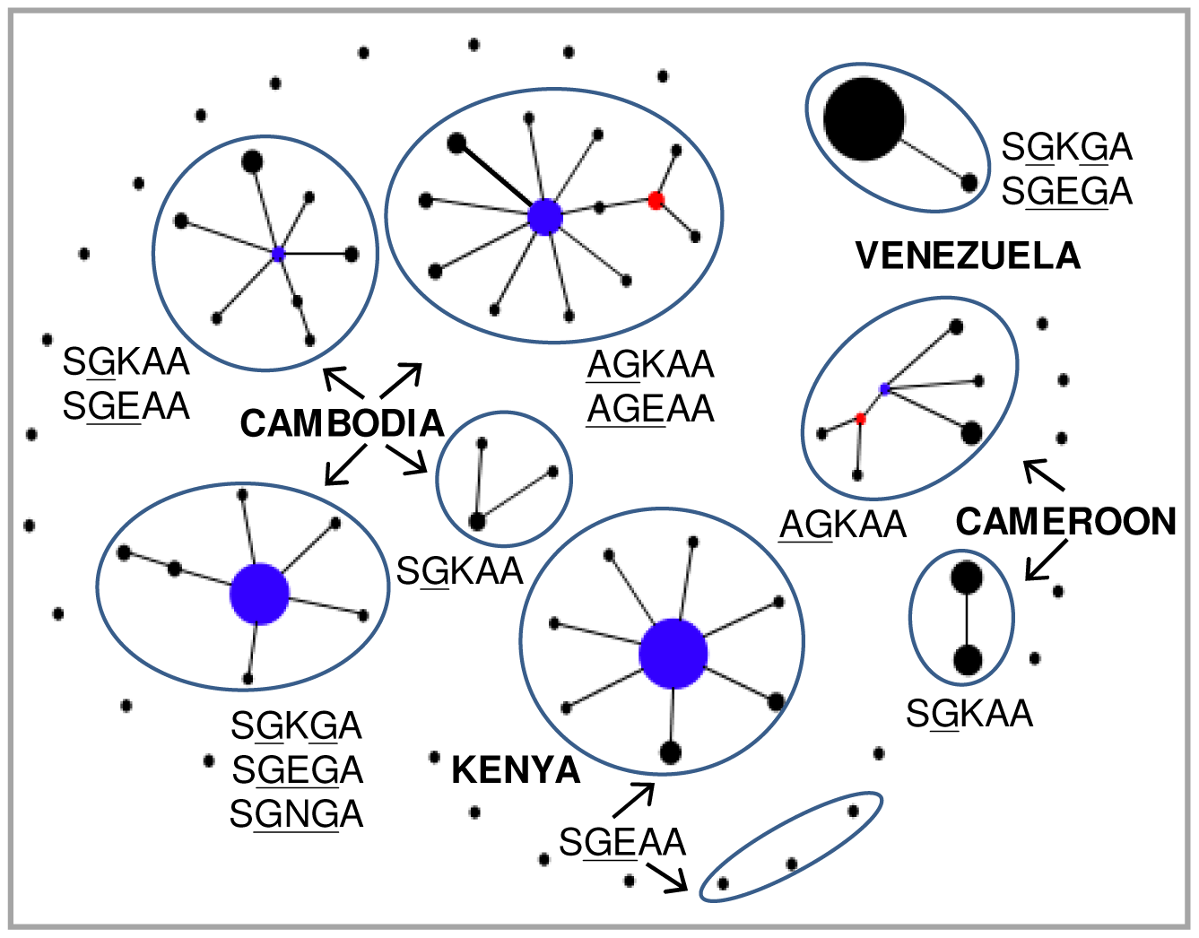 Genetic relationships among the <i>dhps</i> alleles of Southeast Asia (Cambodia), Africa (Kenya and Cameroon) and South America (Venezuela).